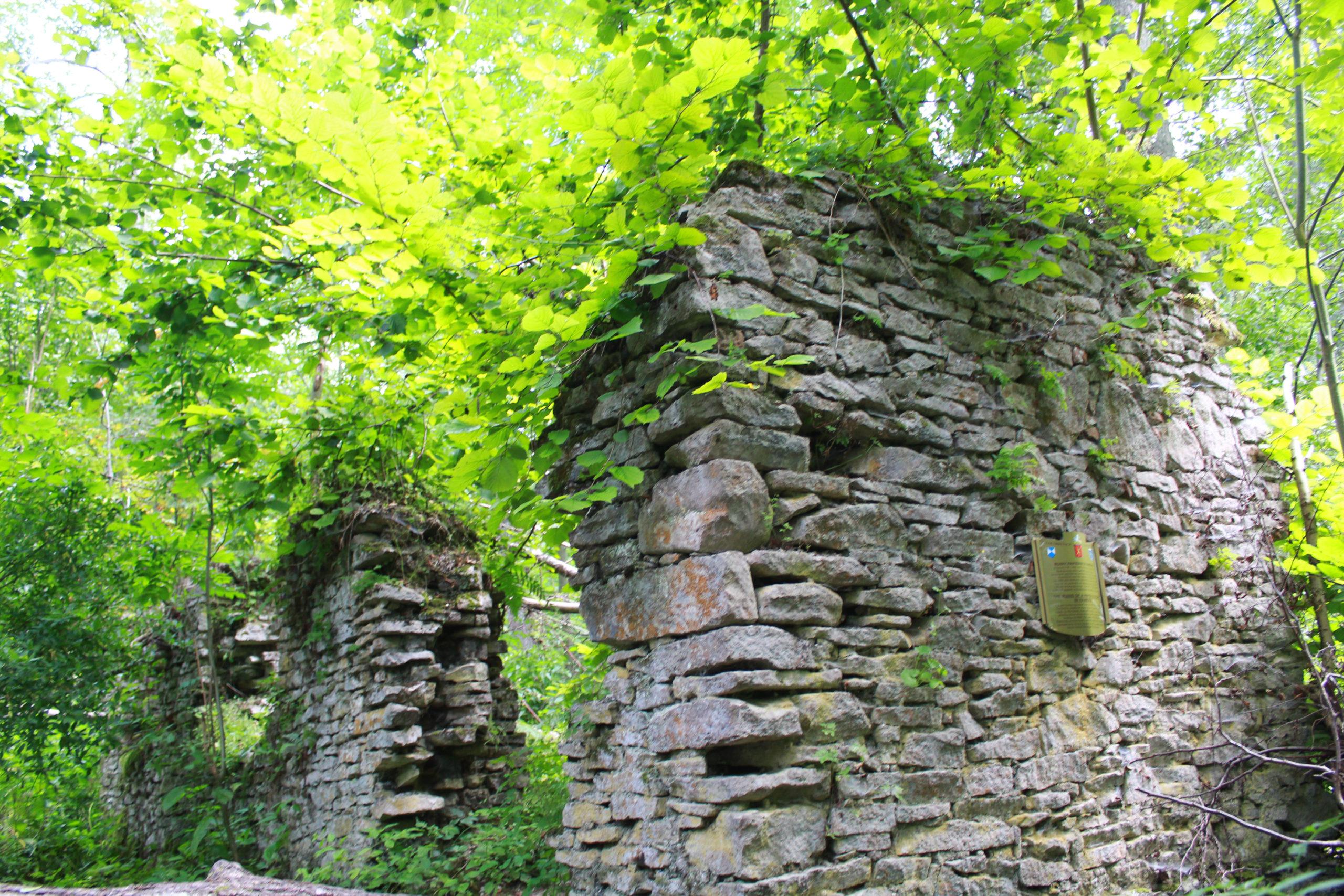 ruiny w lesie