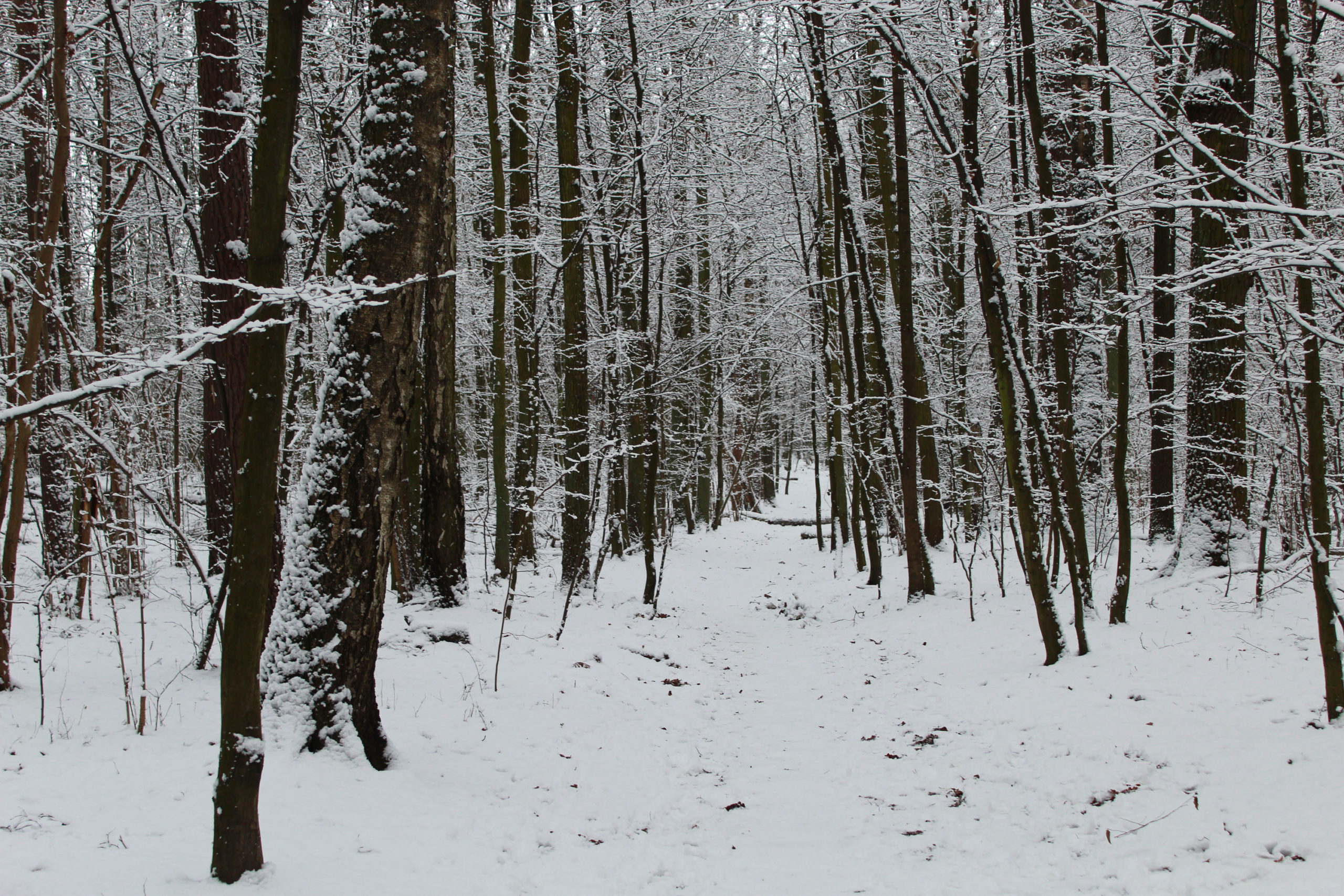 widok na leśną drogę w zimie
