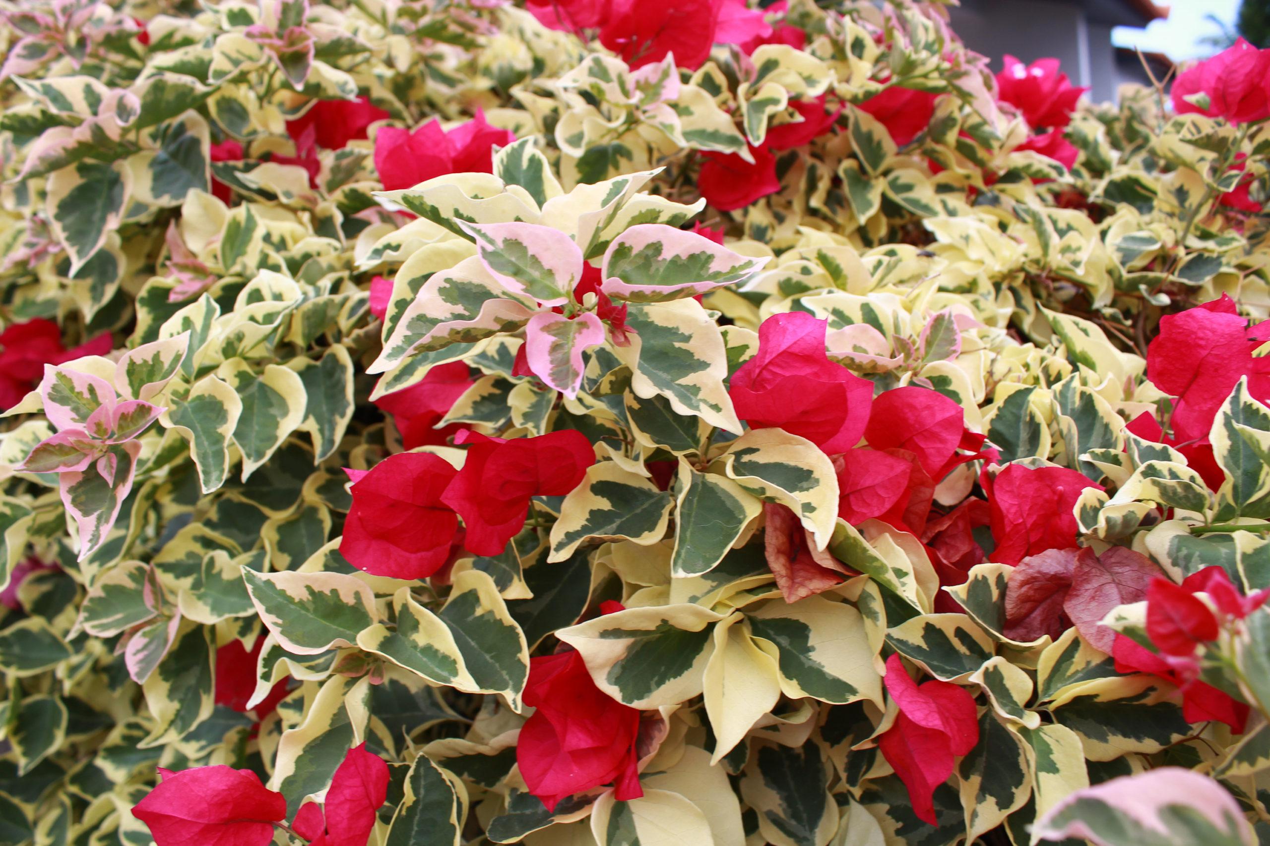 widok na kwiaty i liście