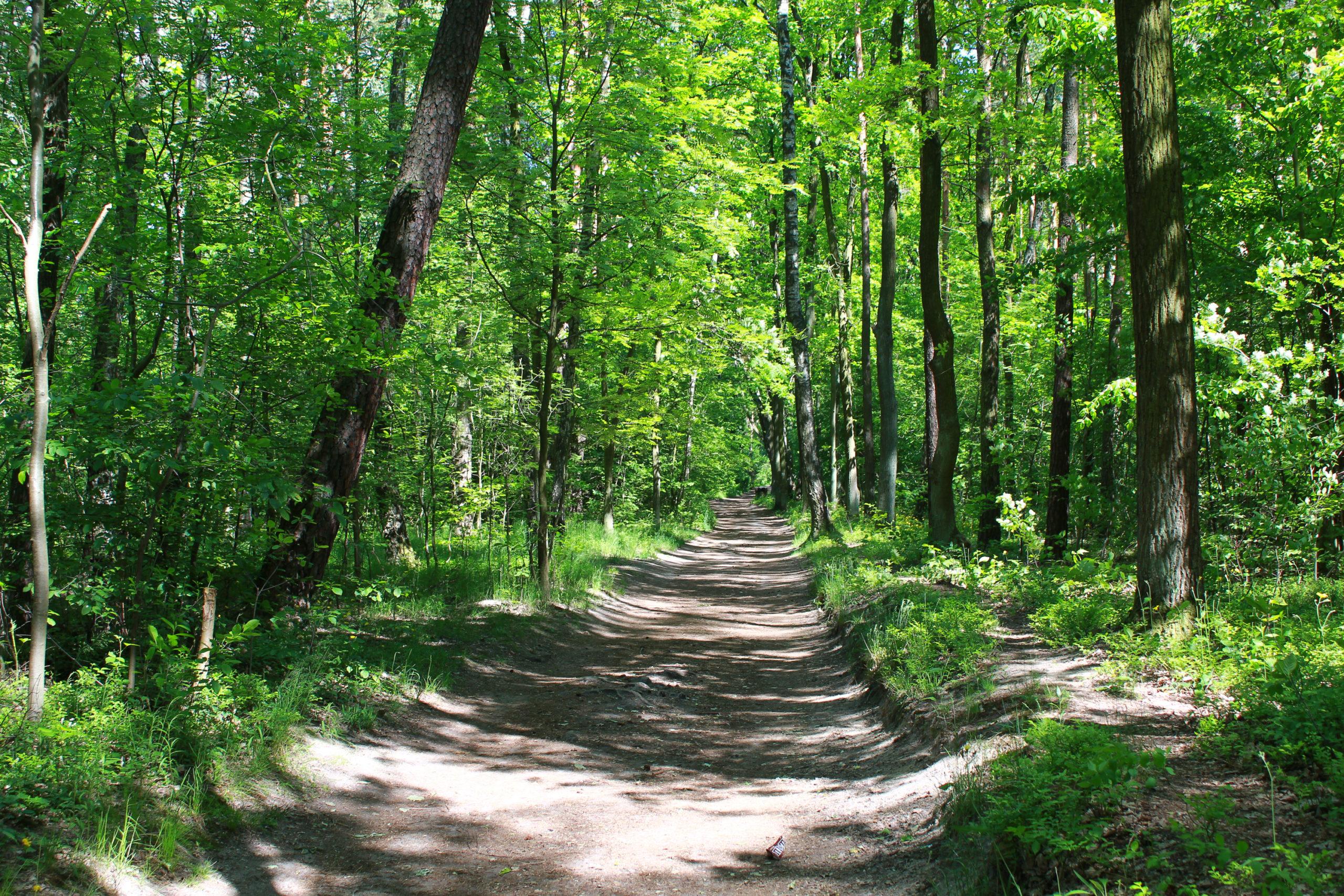 Las Kabacki droga w lesie