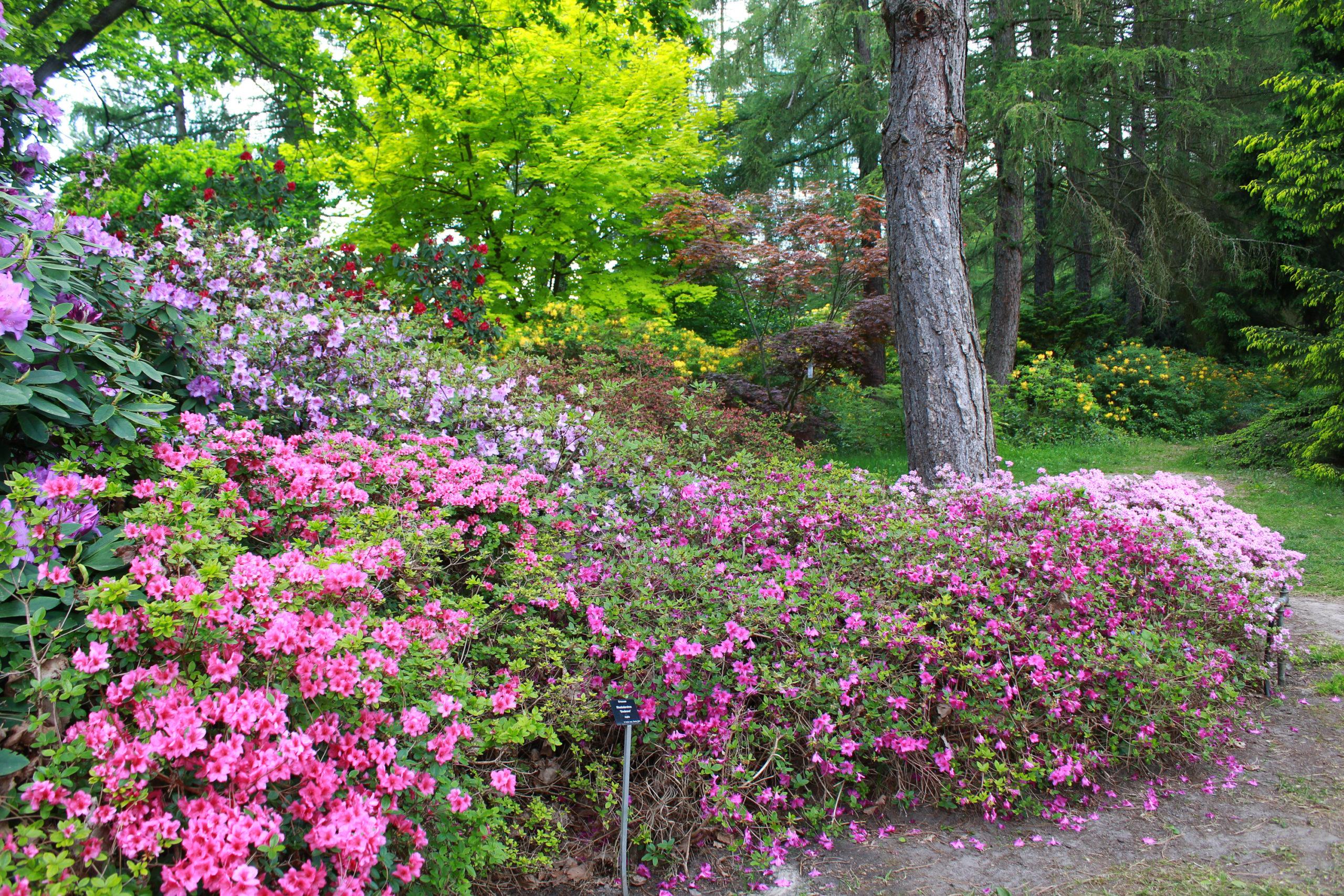 Powsin, ogród botaniczny PAN