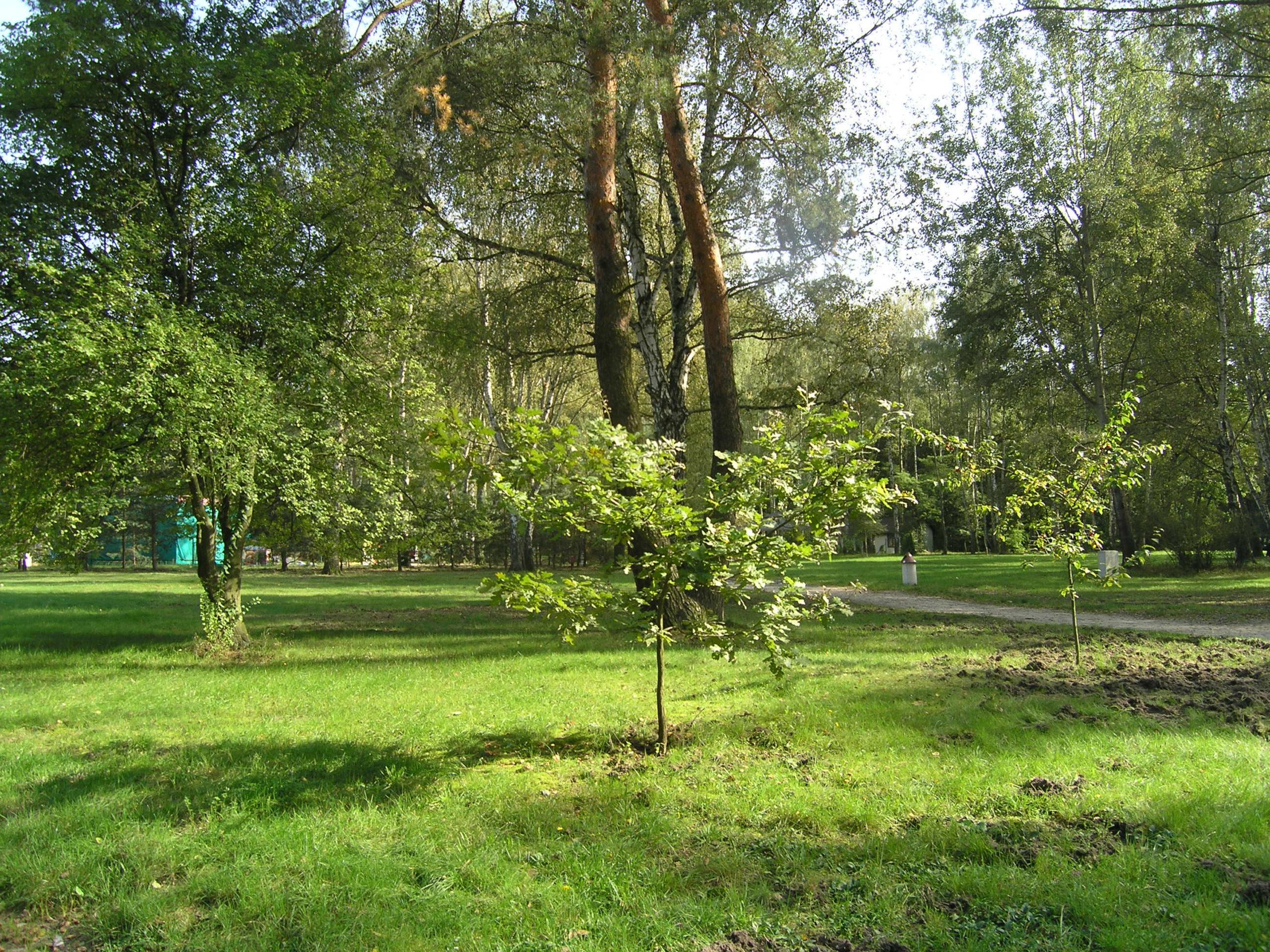 Widok na zieleń drzewa