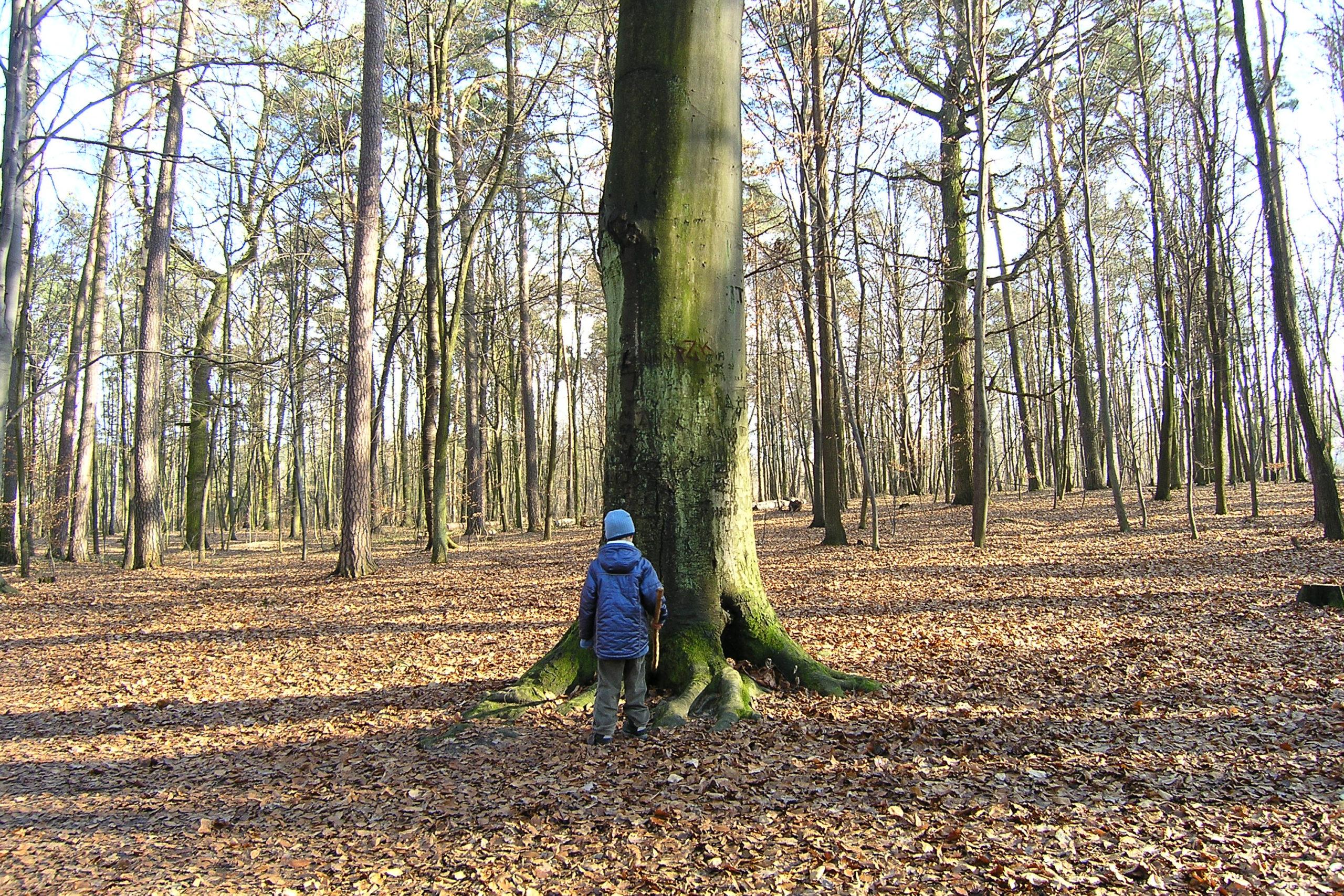 Dziecko pod dużym drzewem