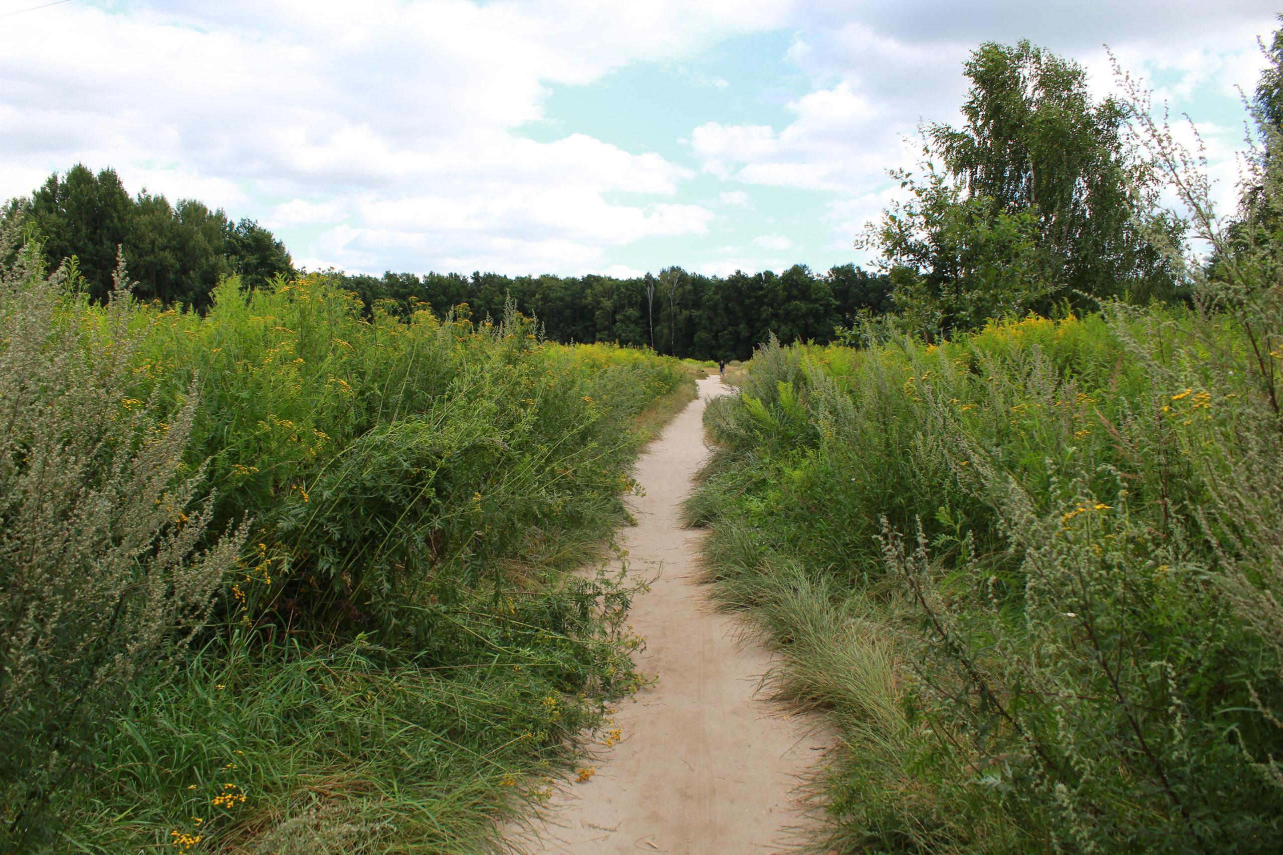ścieżka przez polanę