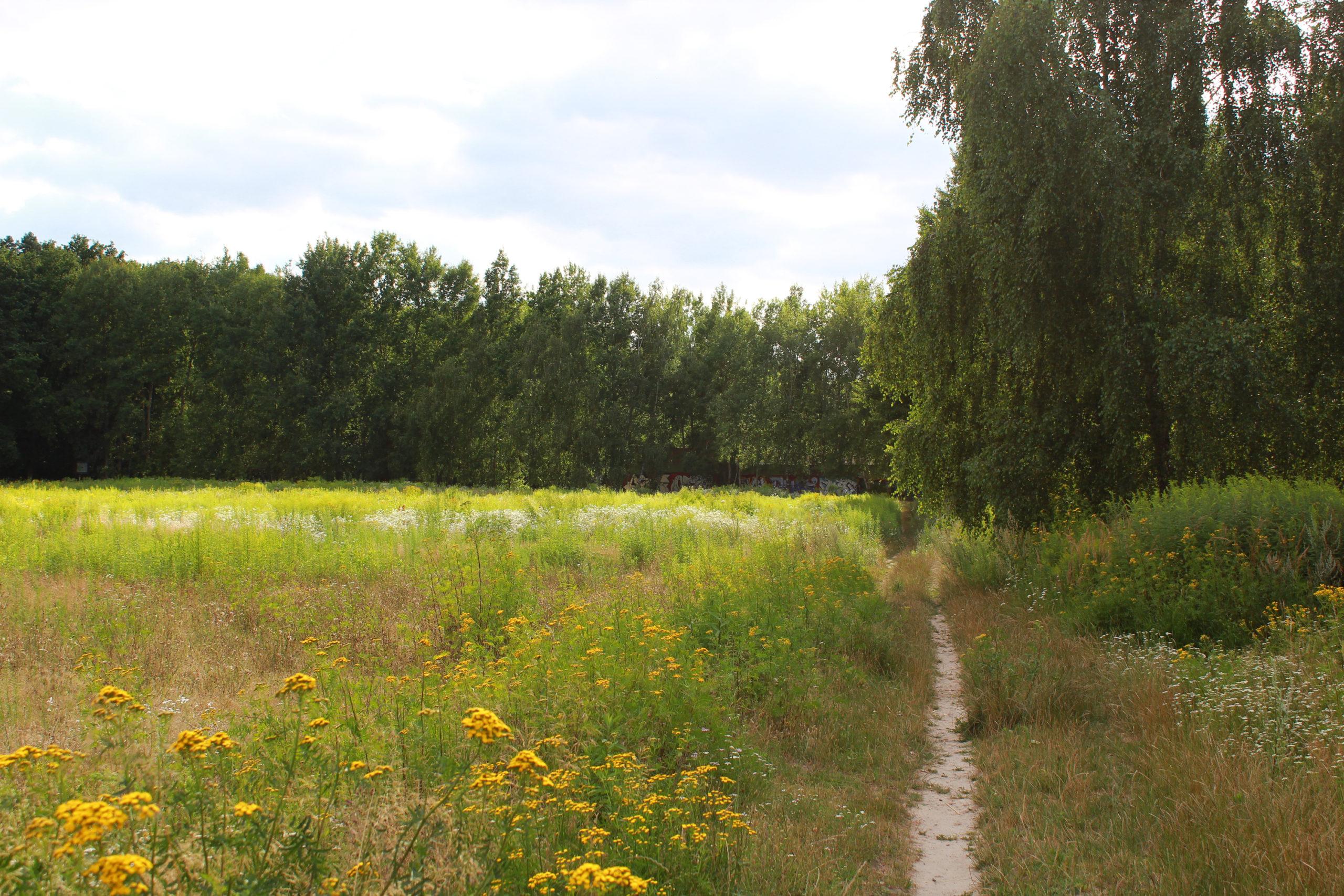 ścieżka pod lasem