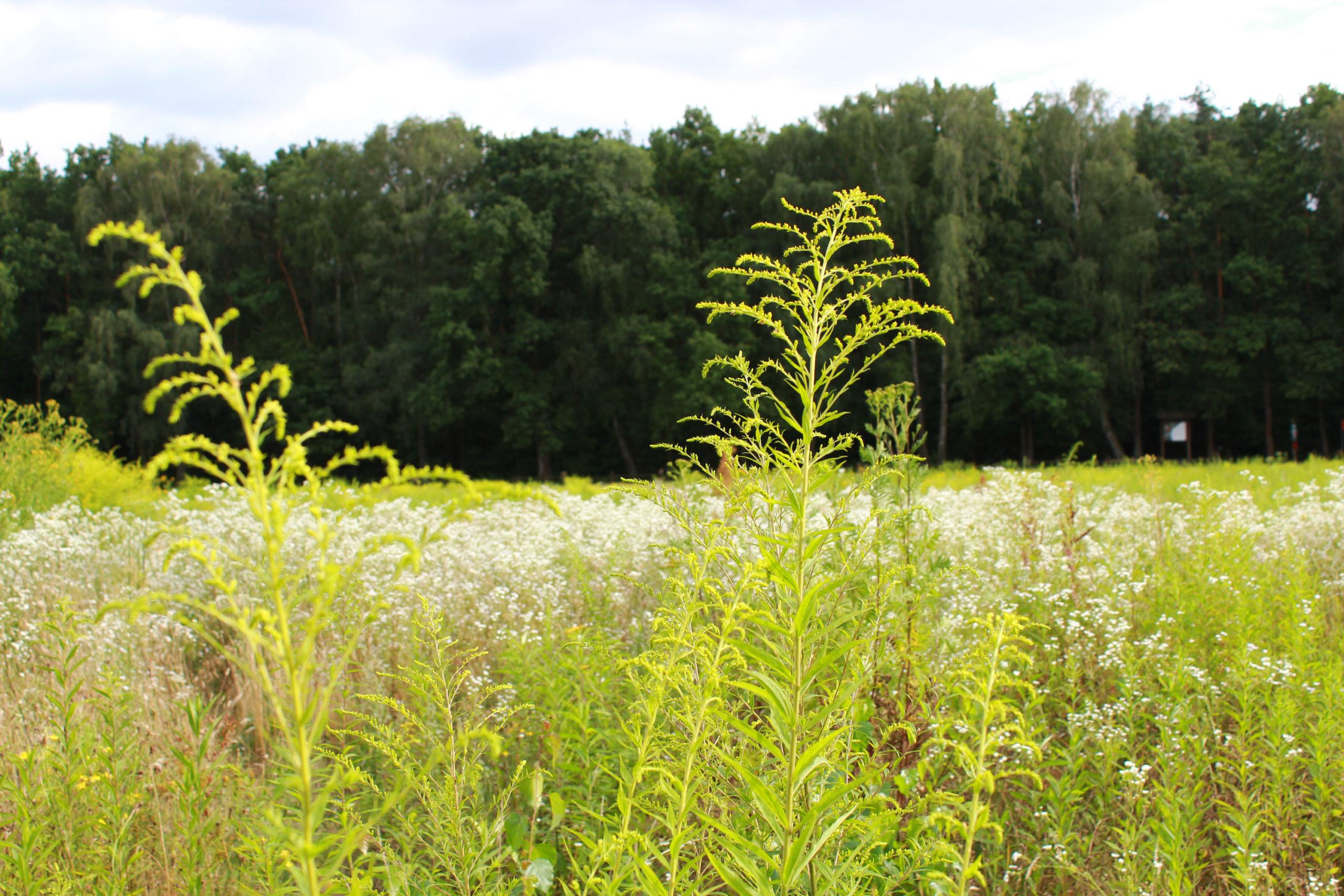 rośliny na polanie