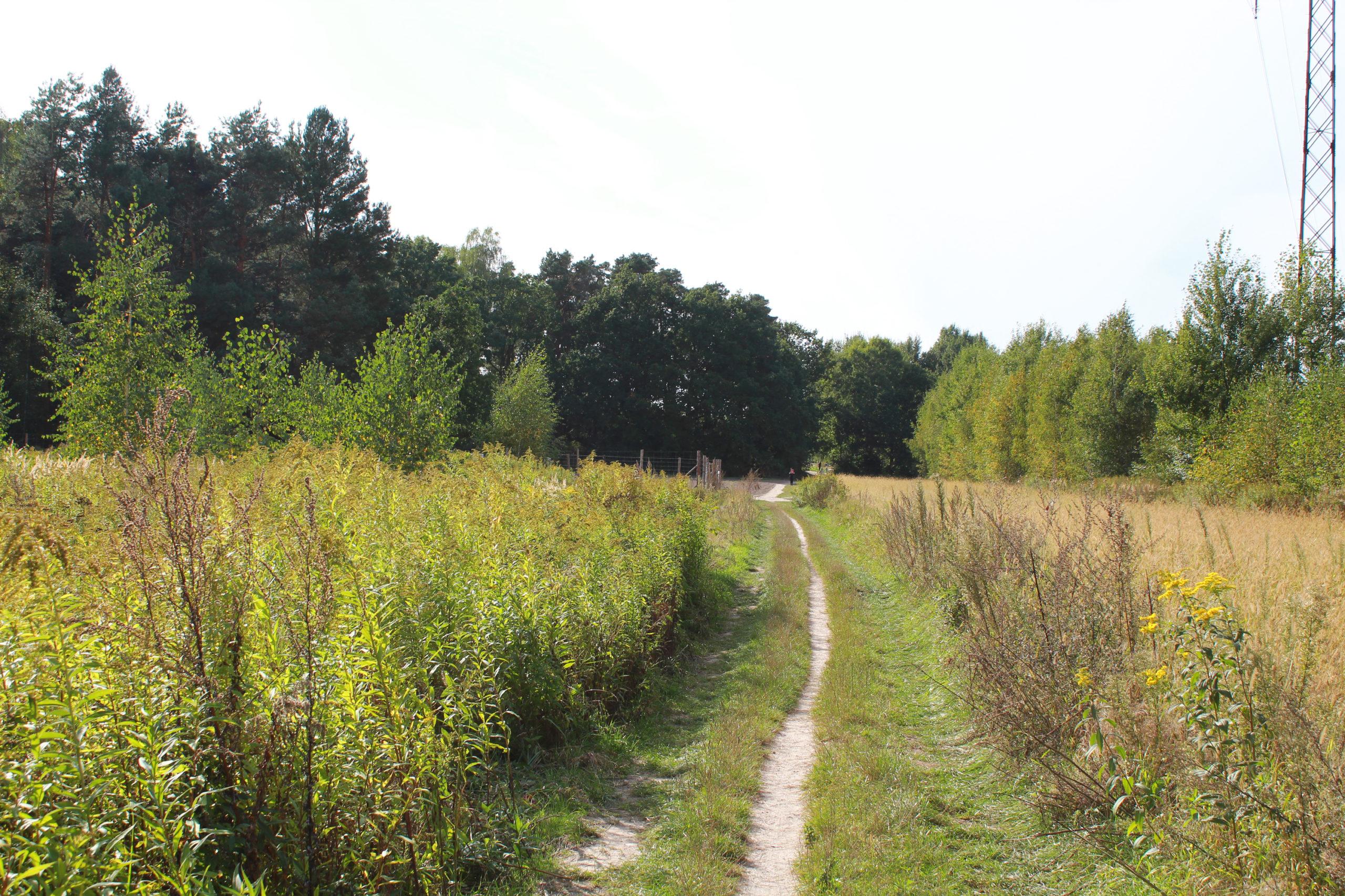 ścieżka w polu
