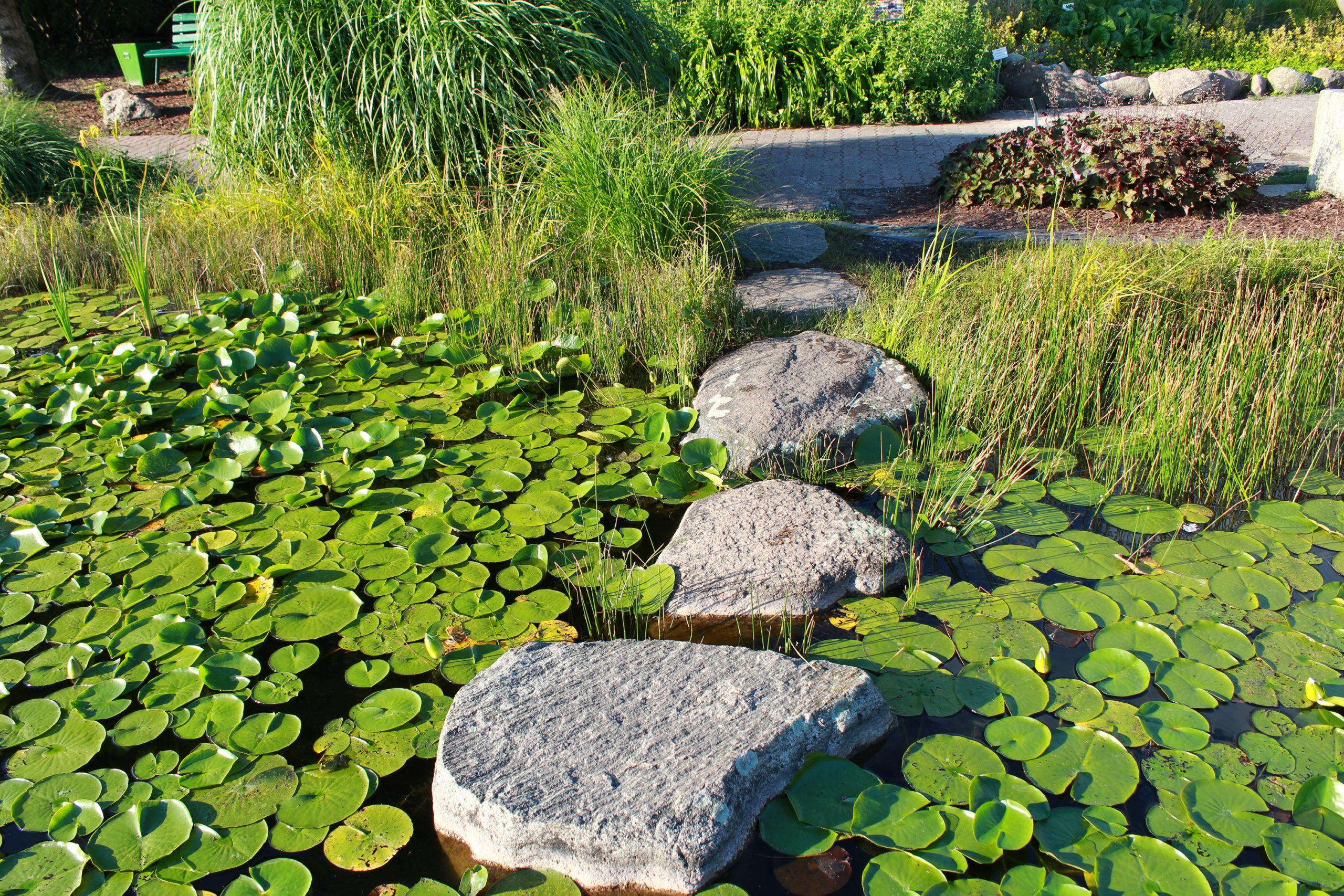 Kamienie w zbiorniku wodnym
