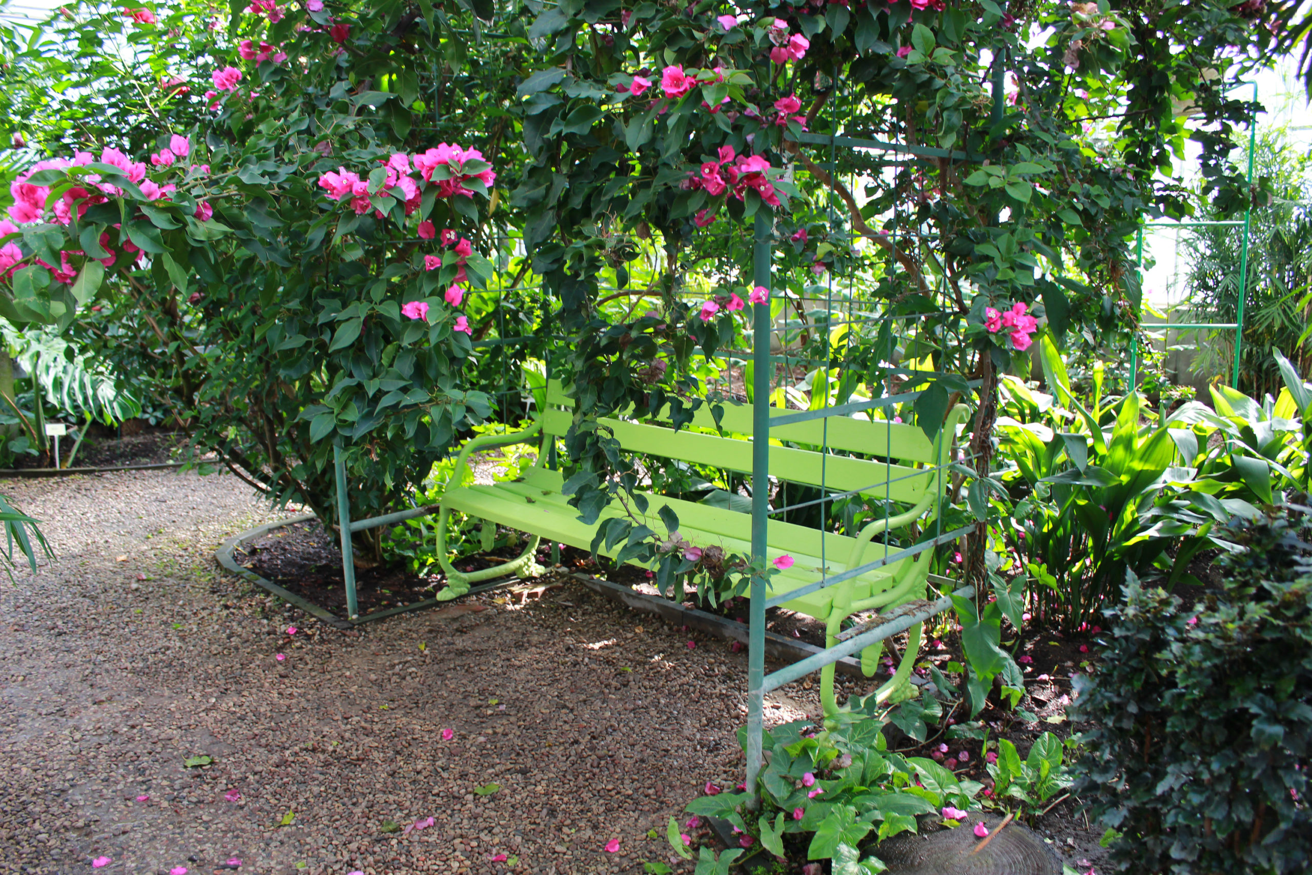 Powsin widok na kwiaty i ławeczkę