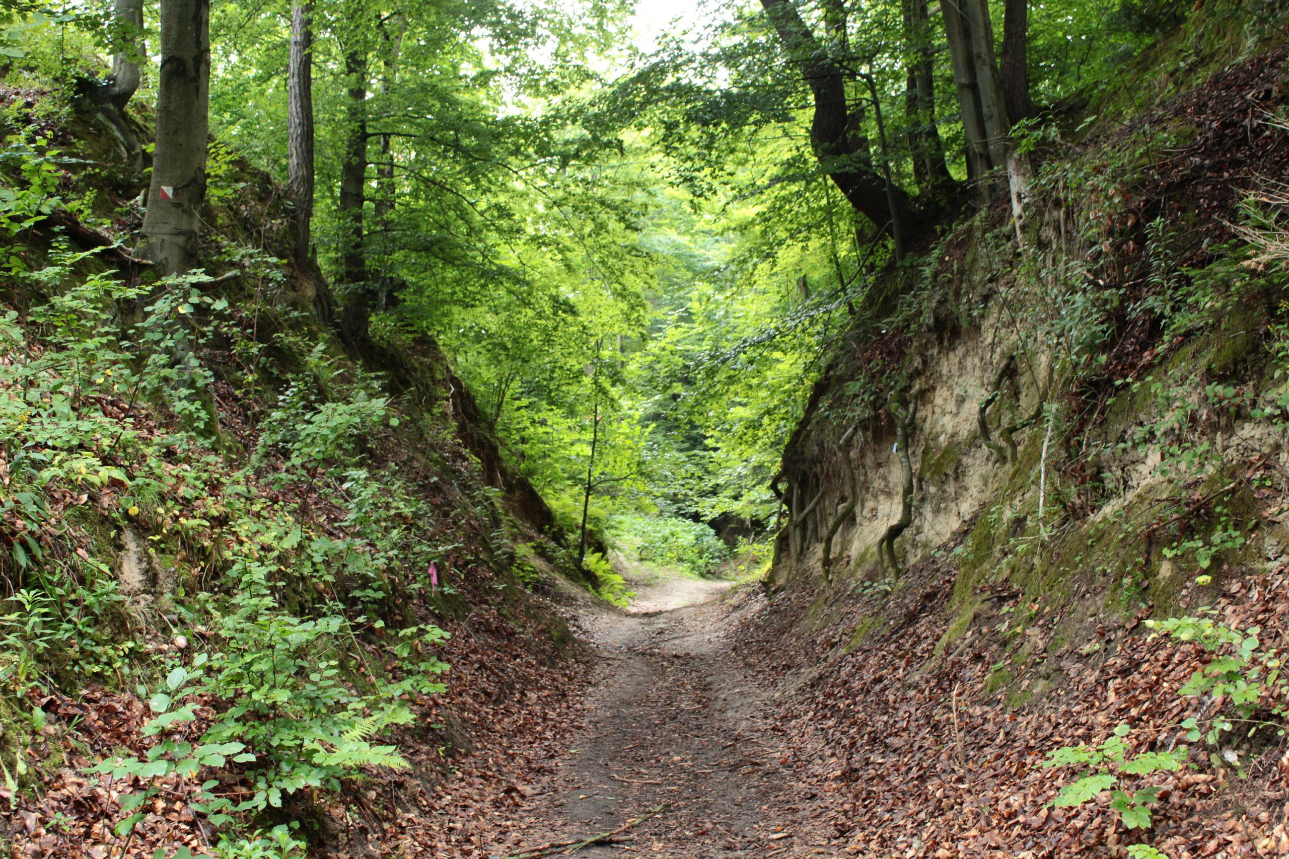 Szlak przy Klifie w lesie