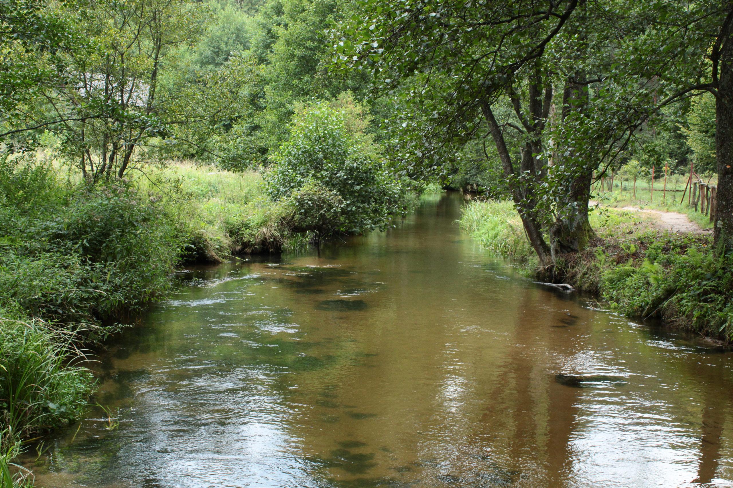 Rzeka wśród drzew