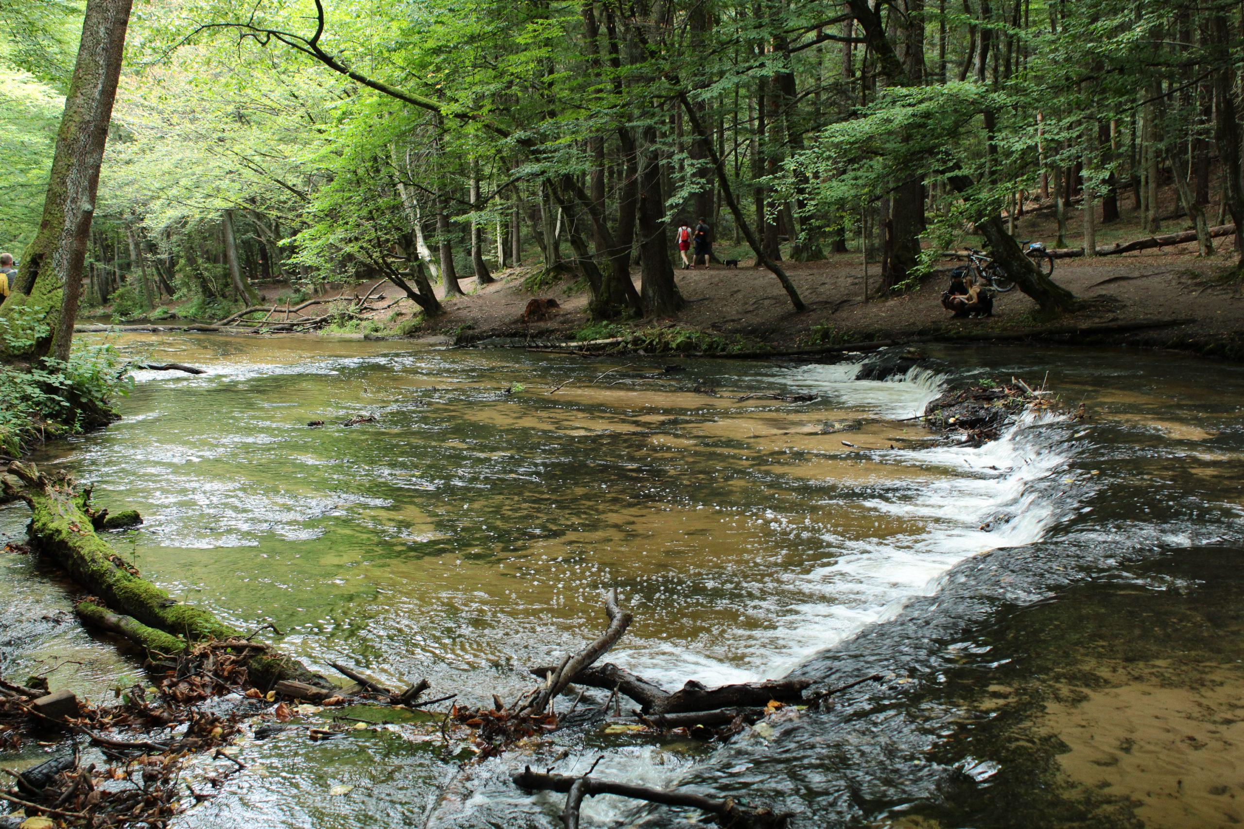 Mały wodospad w lesie