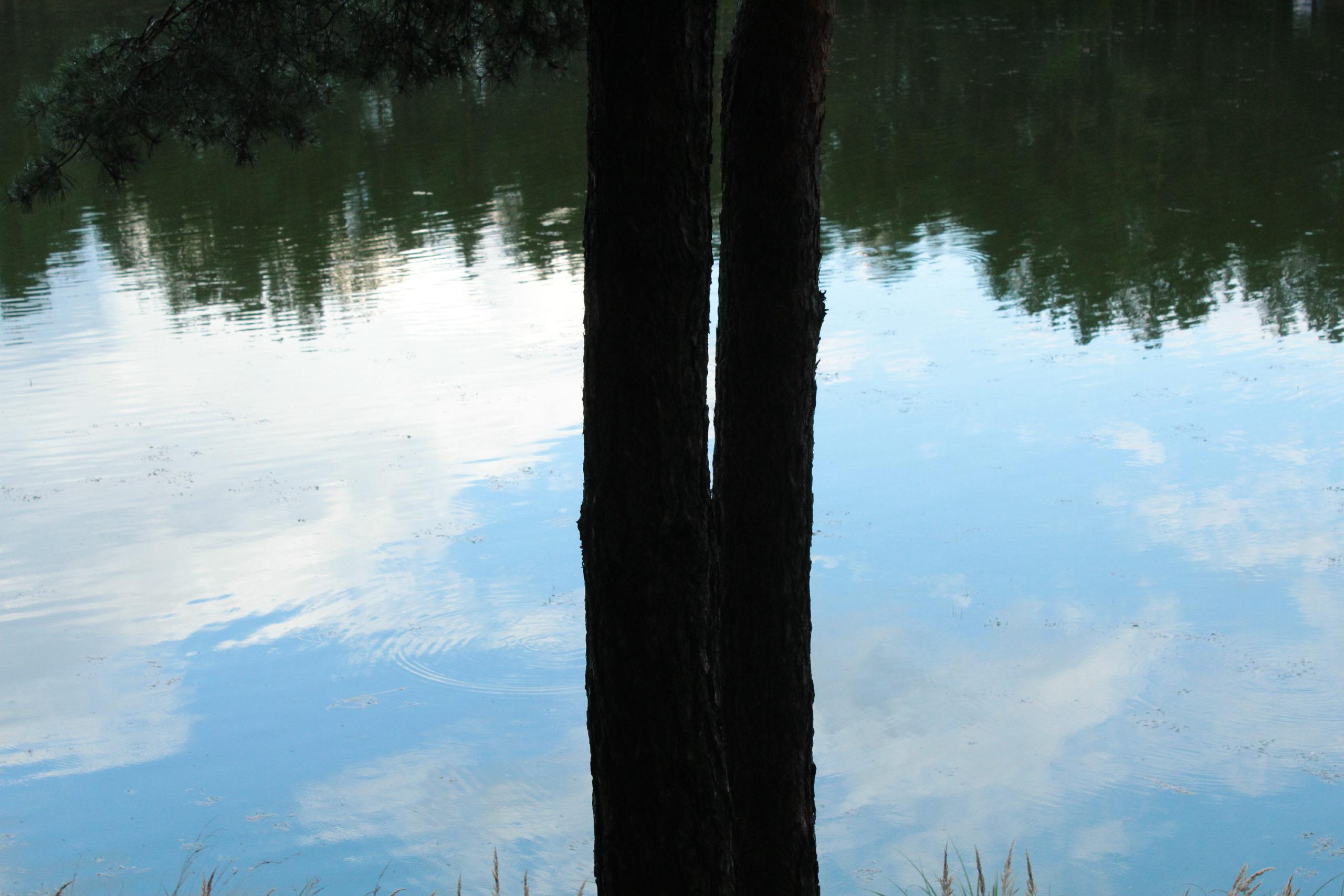 Drzewo na tle wody