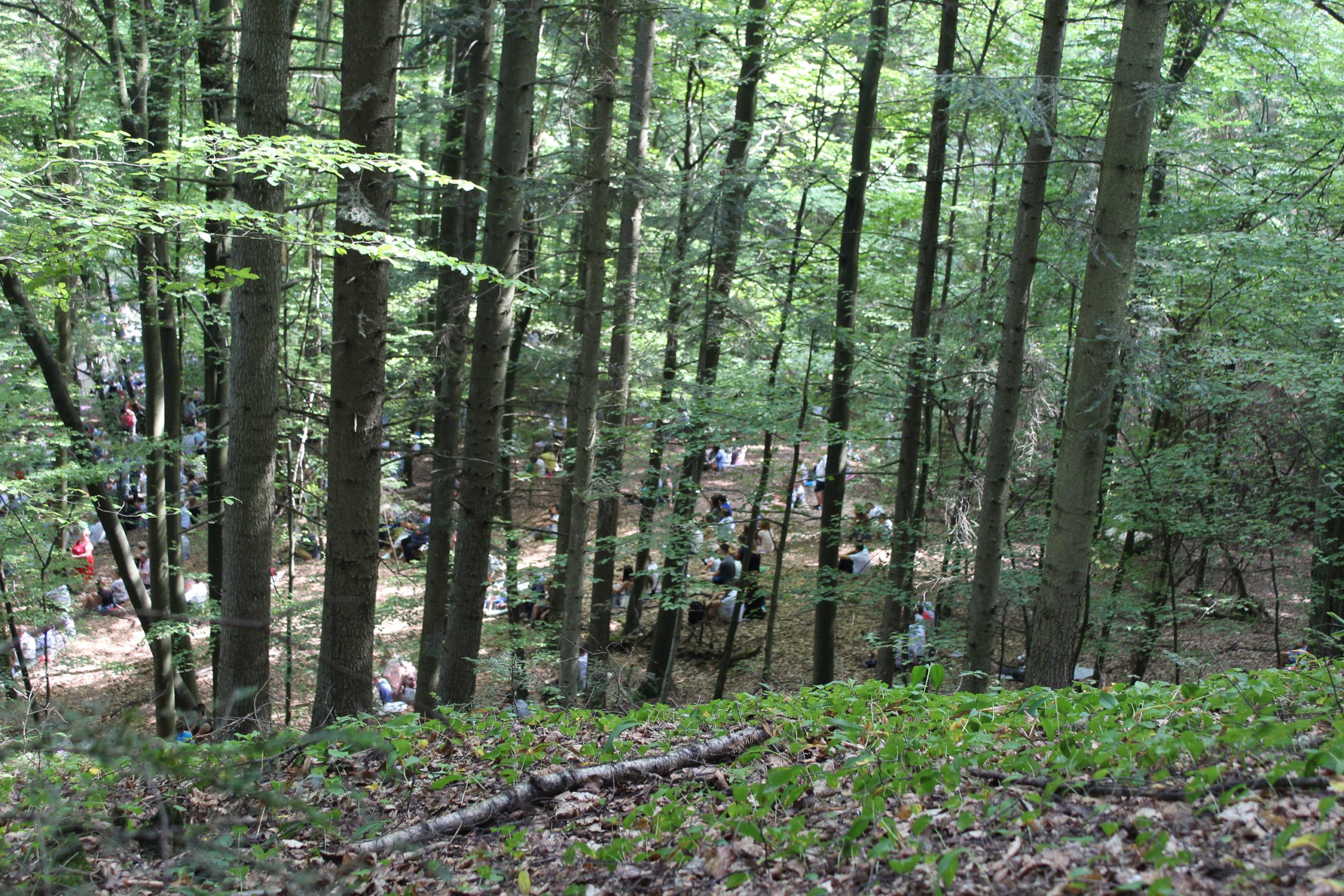 Ludzie w lesie