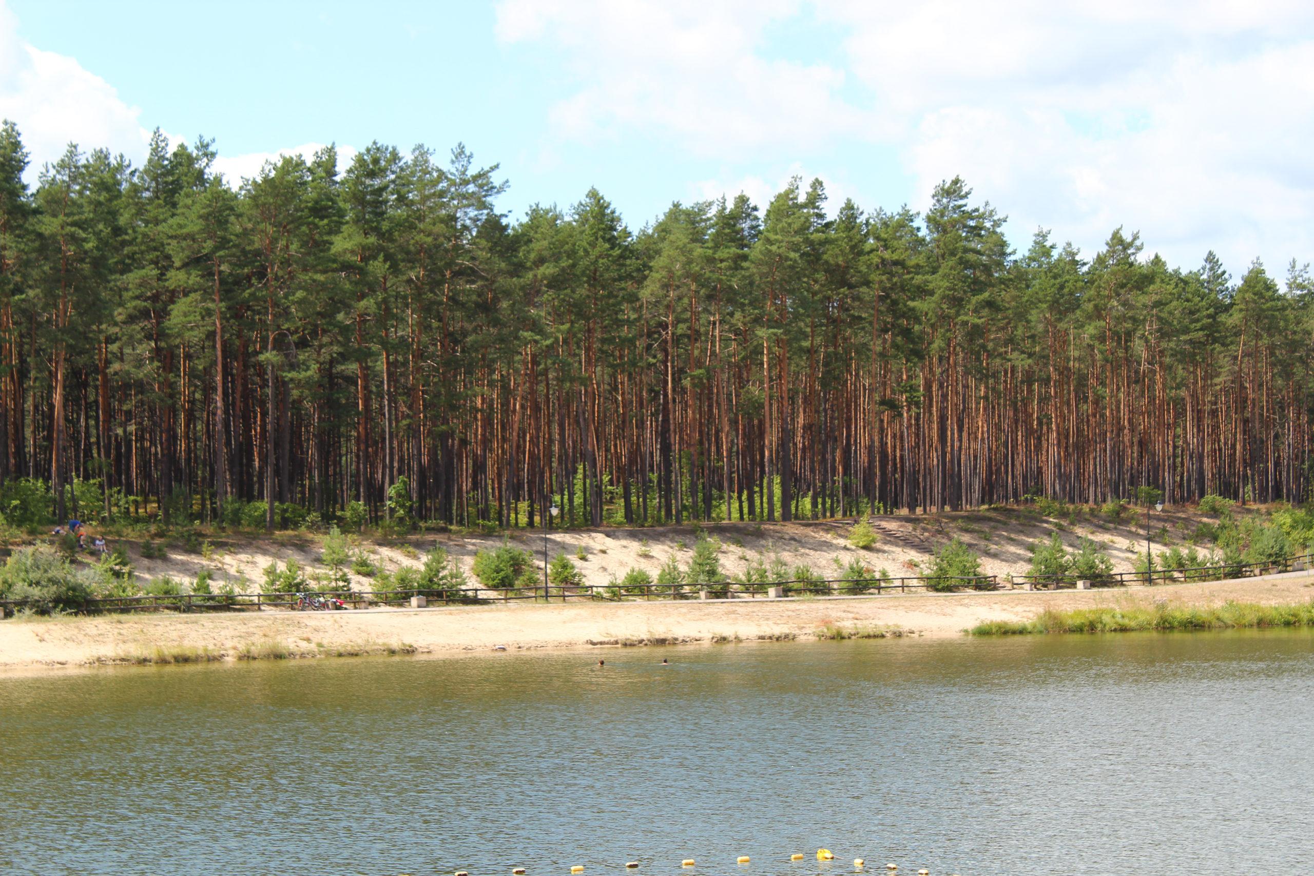 Las Sosnowy i jezioro