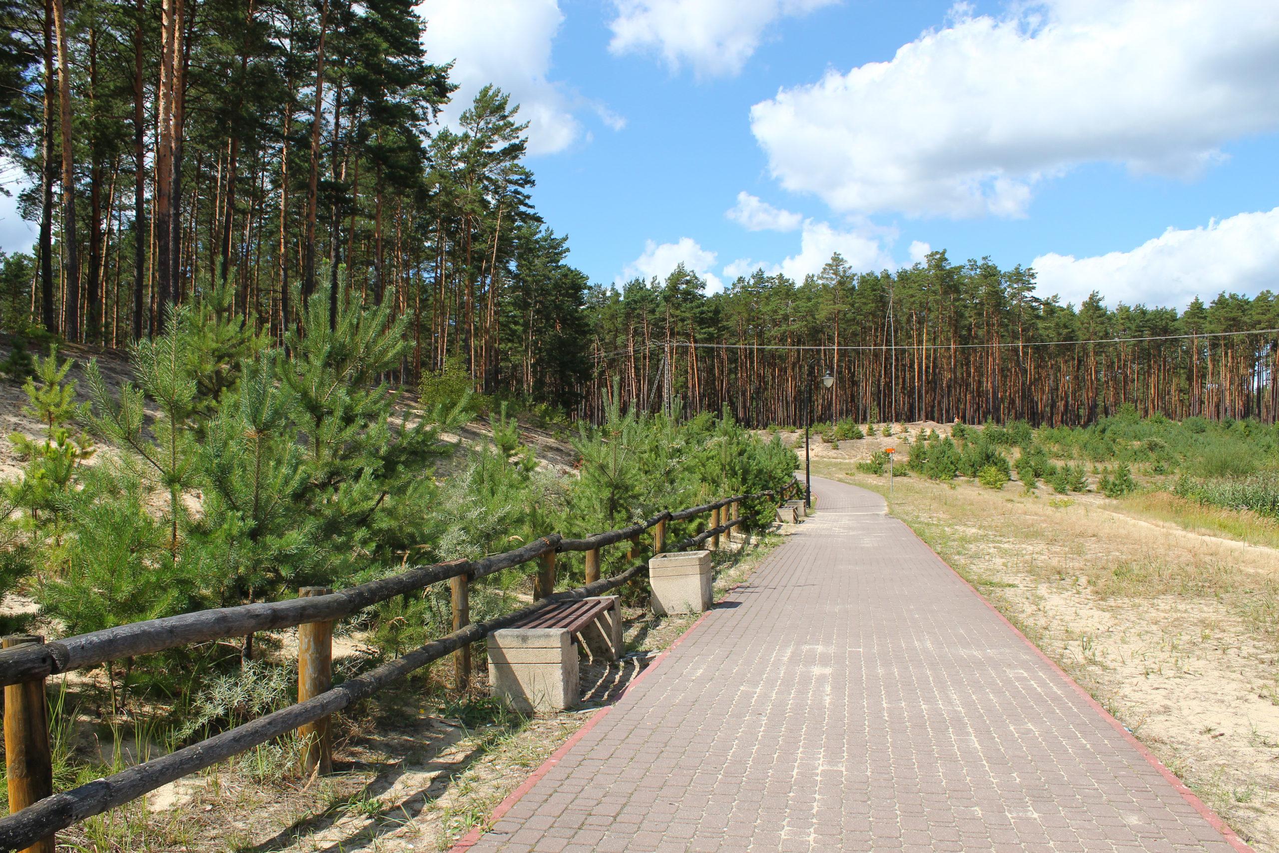 Chodnik przy lesie