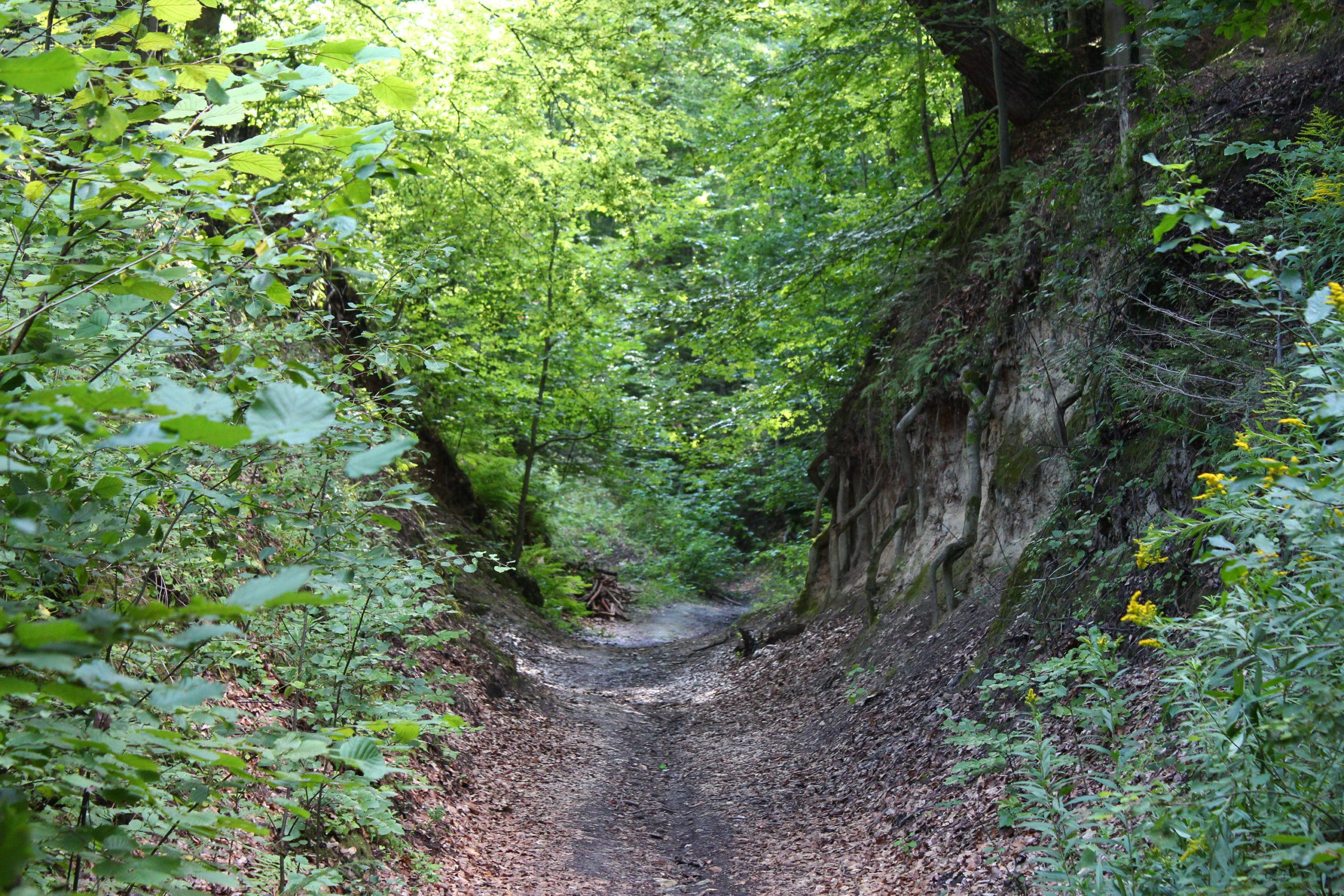 Ścieżka w lesie