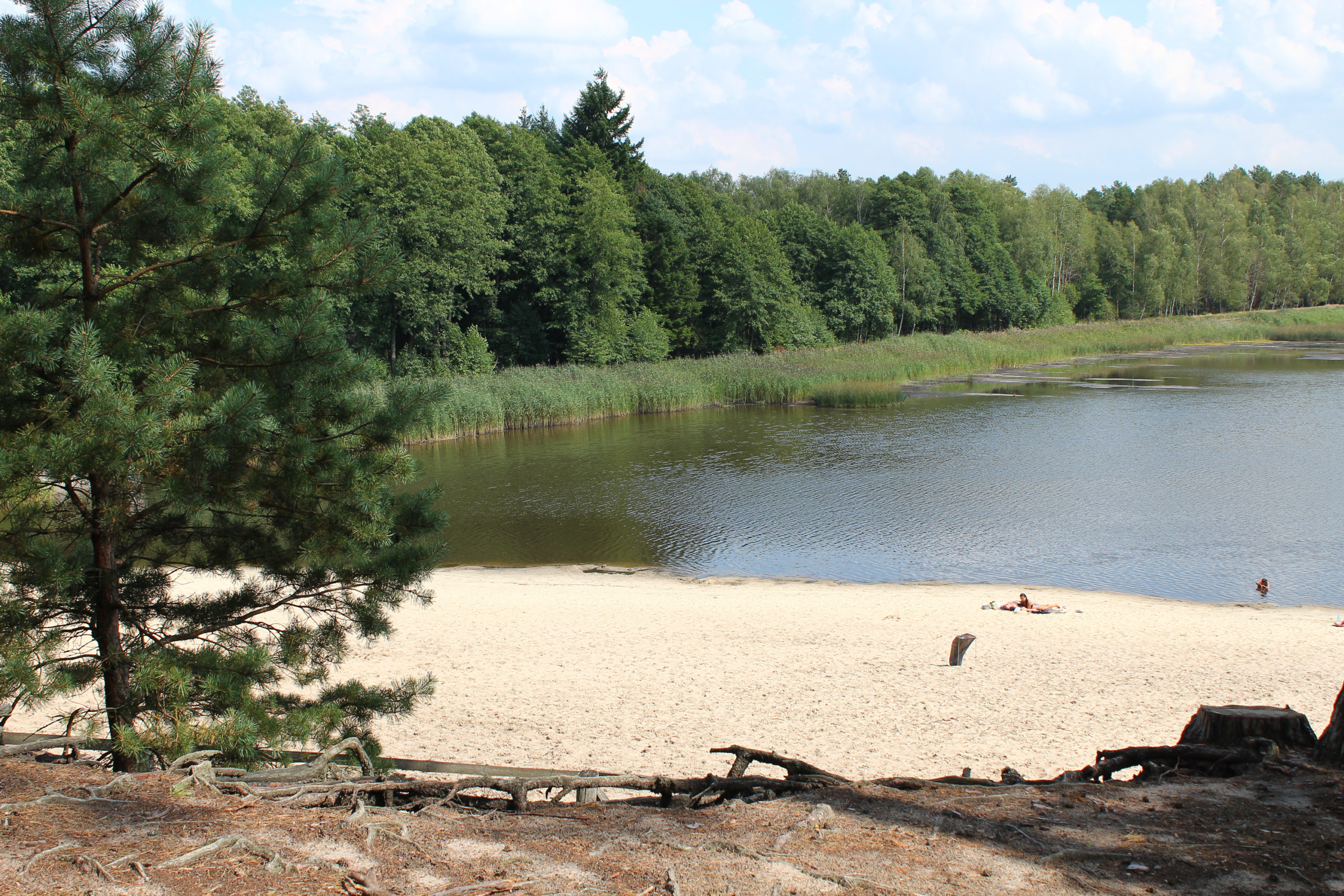 Widok na plażę i wodę
