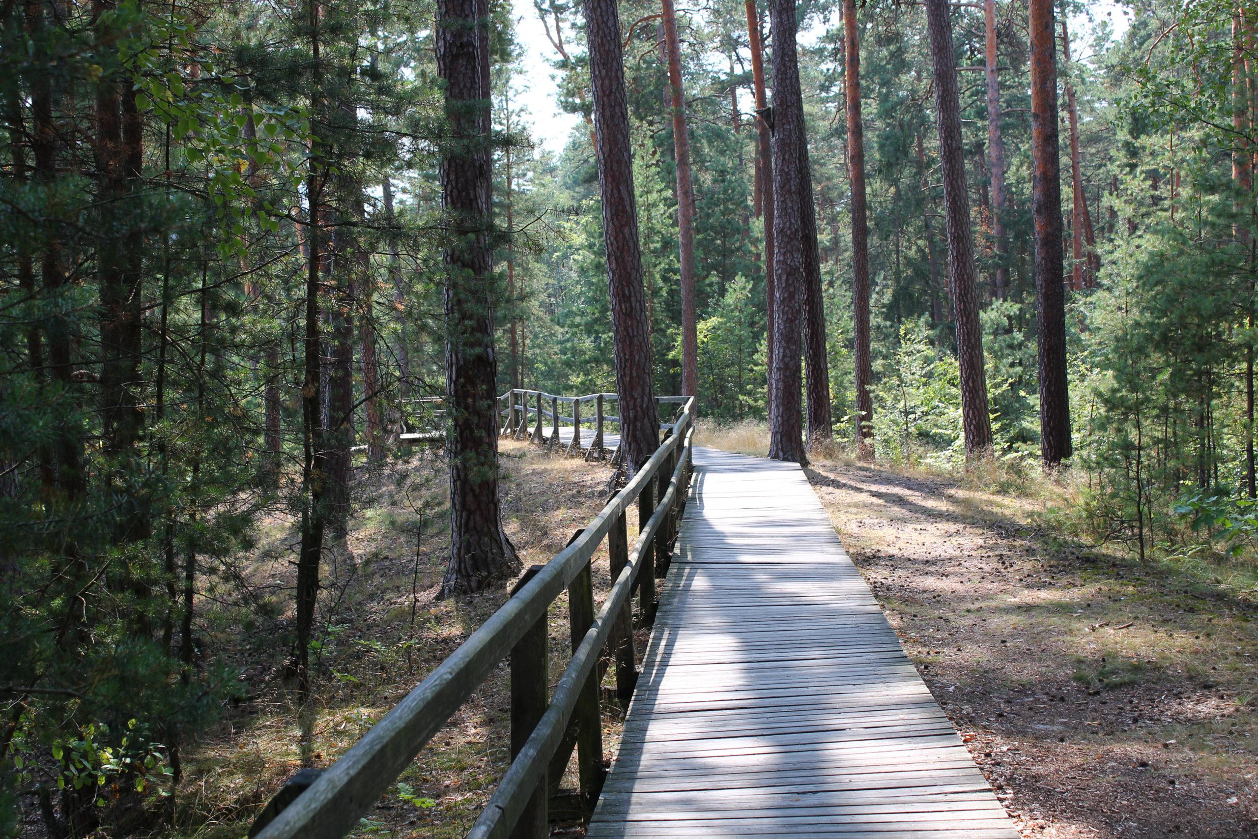 Drewniana ścieżka w lesie