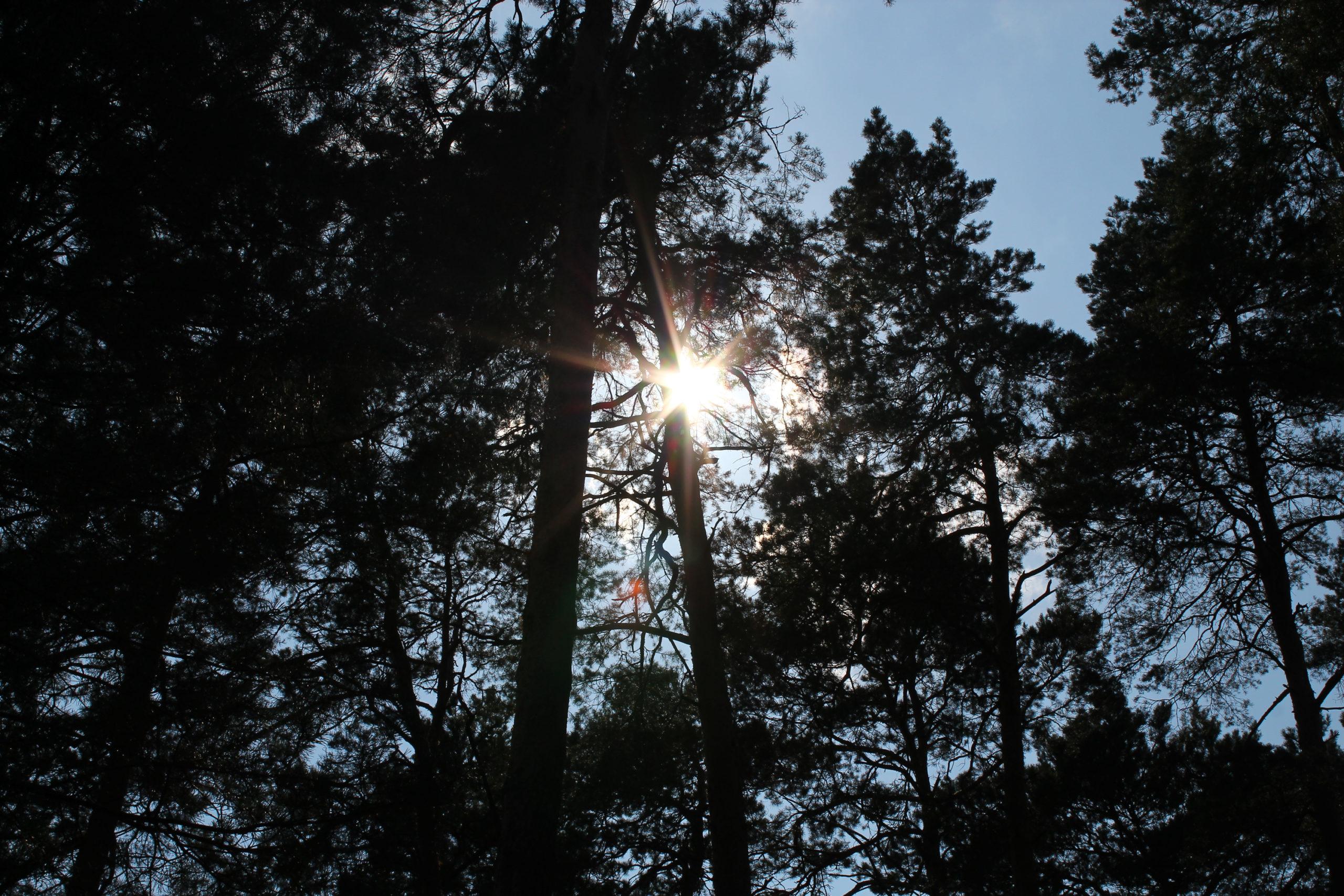 Słońce przebija się przez korony drzew