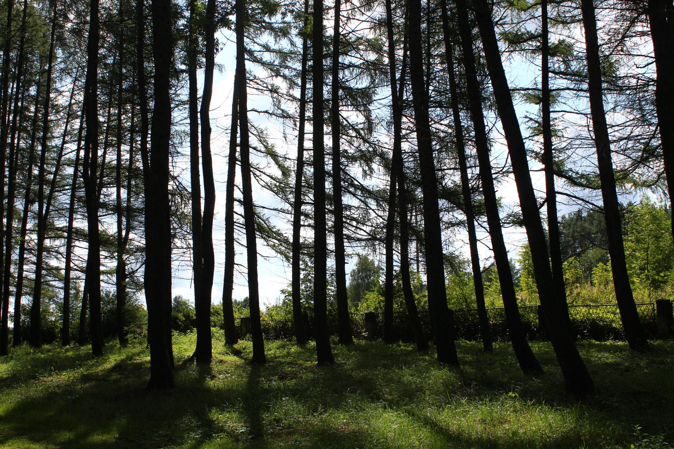 Drzewa rzucają cień