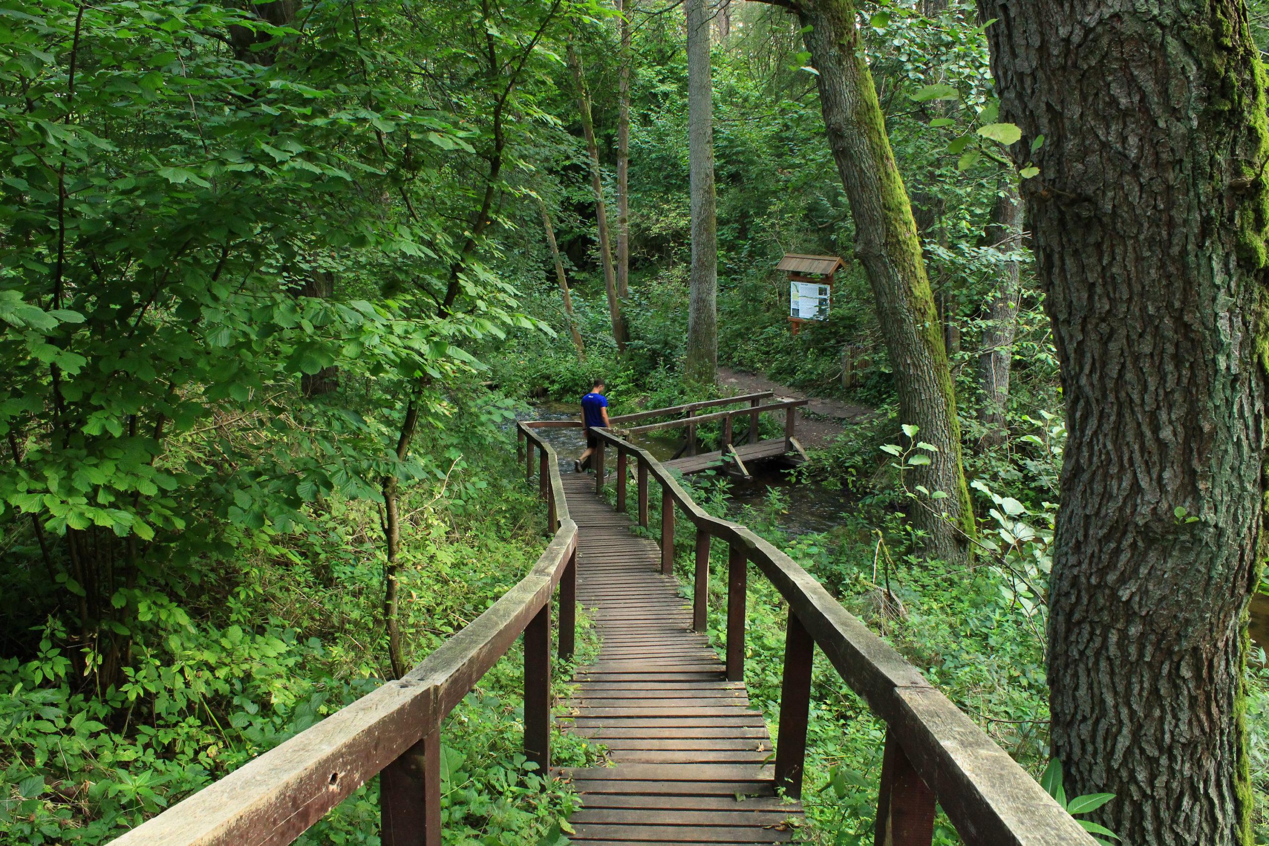 Drewniany szlak wśród drzew