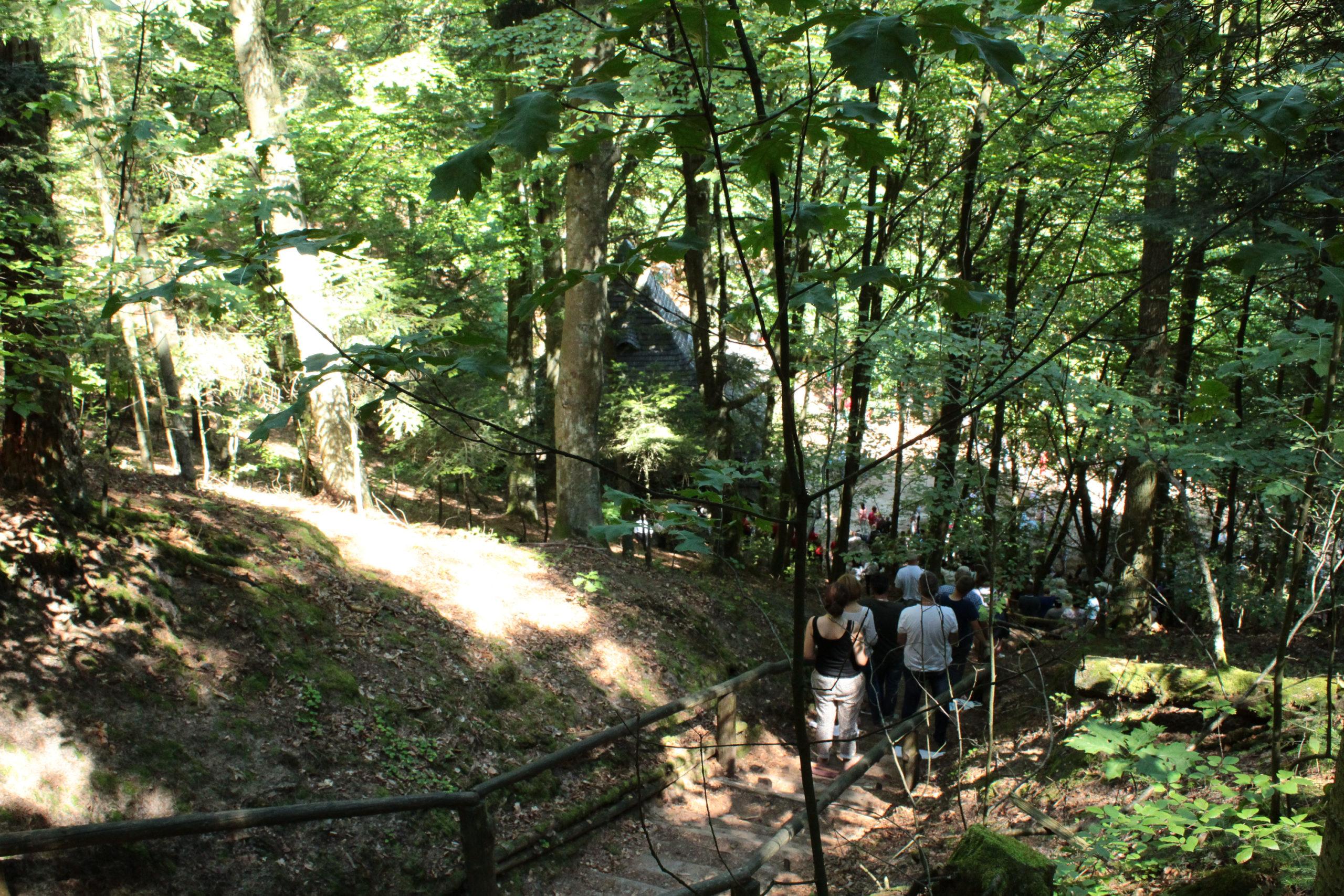 Ludzie na szlaku w lesie