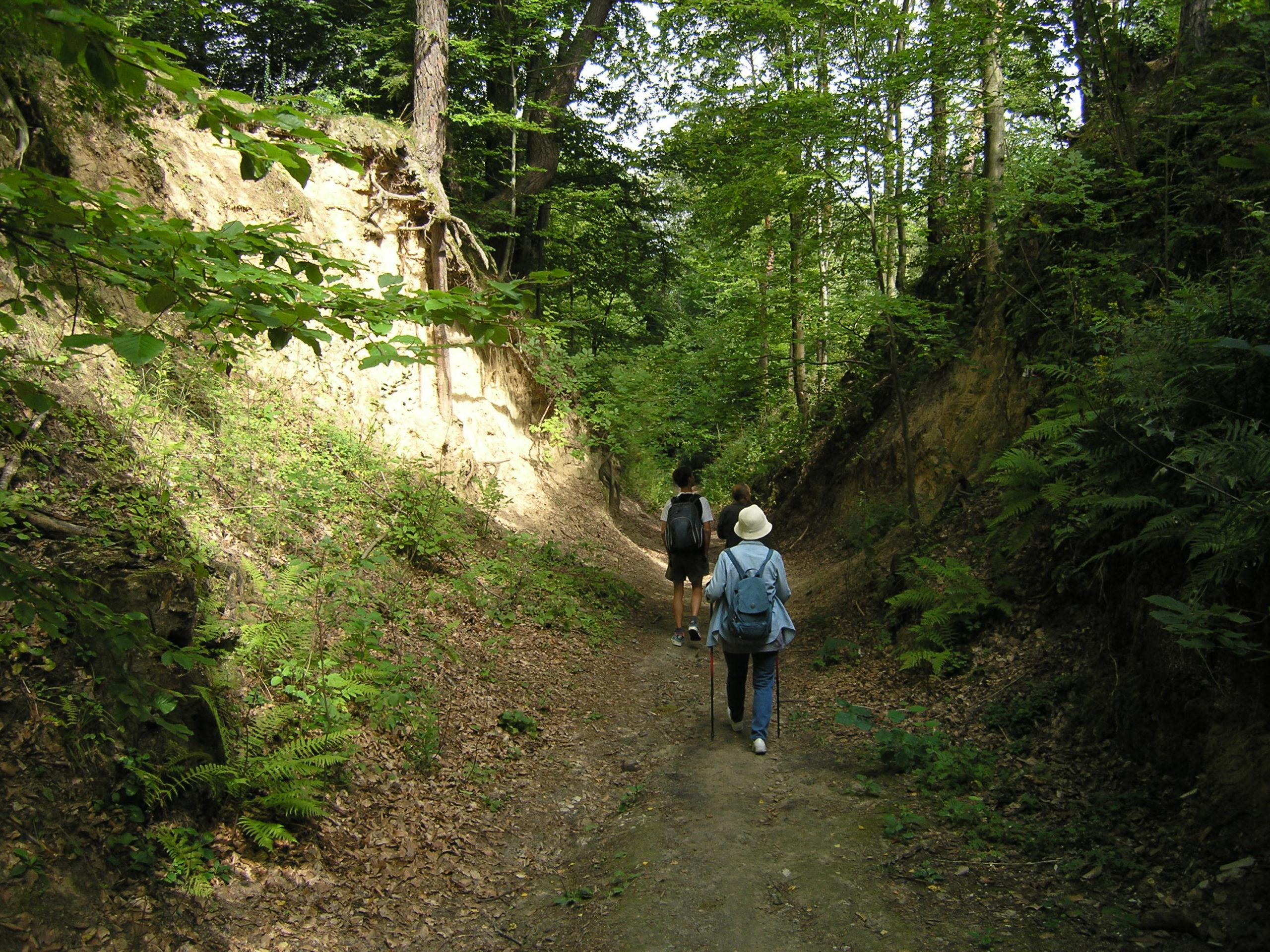 Wędrówka szlakiem w lesie
