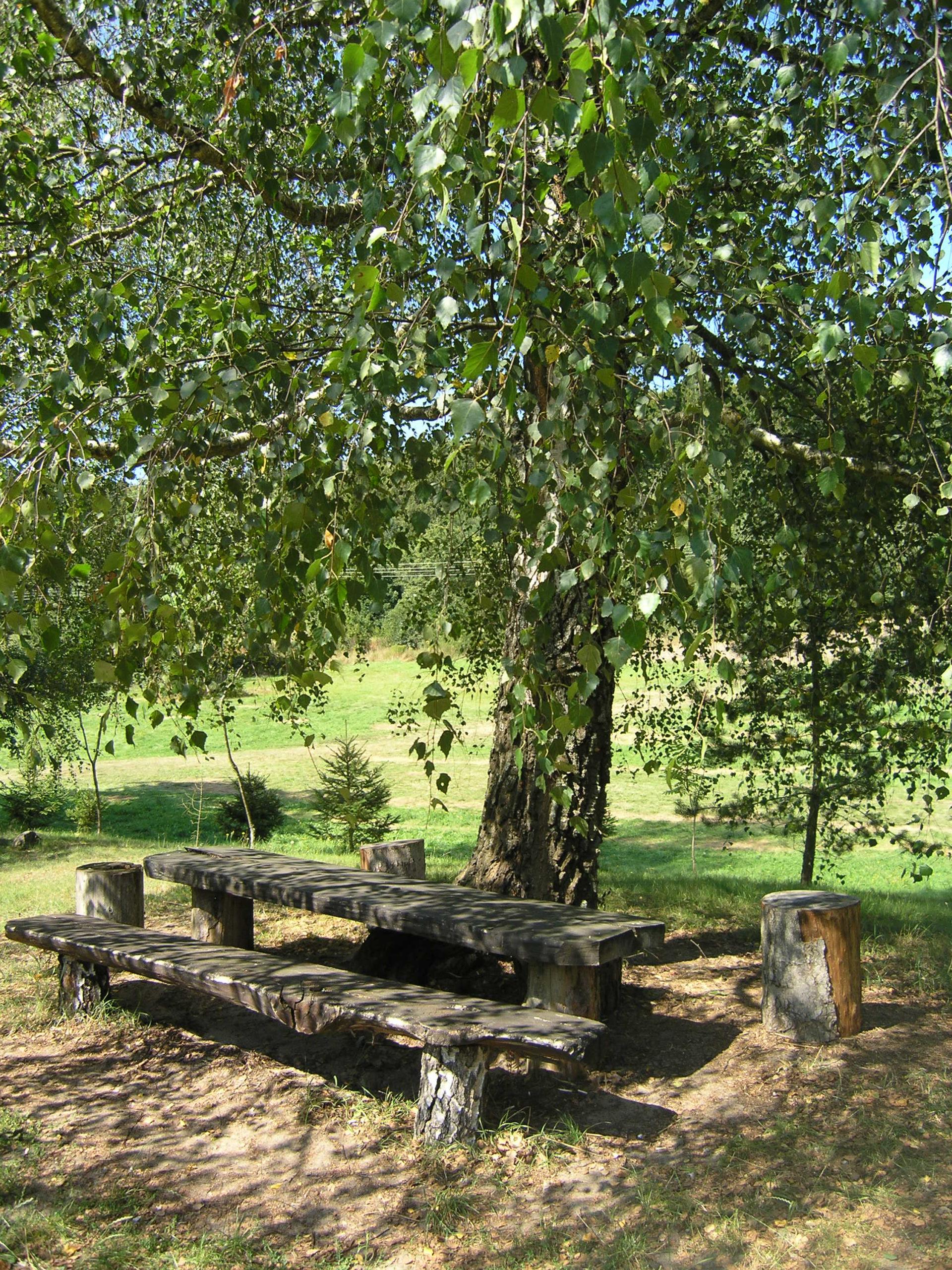 Ławka pod brzoza