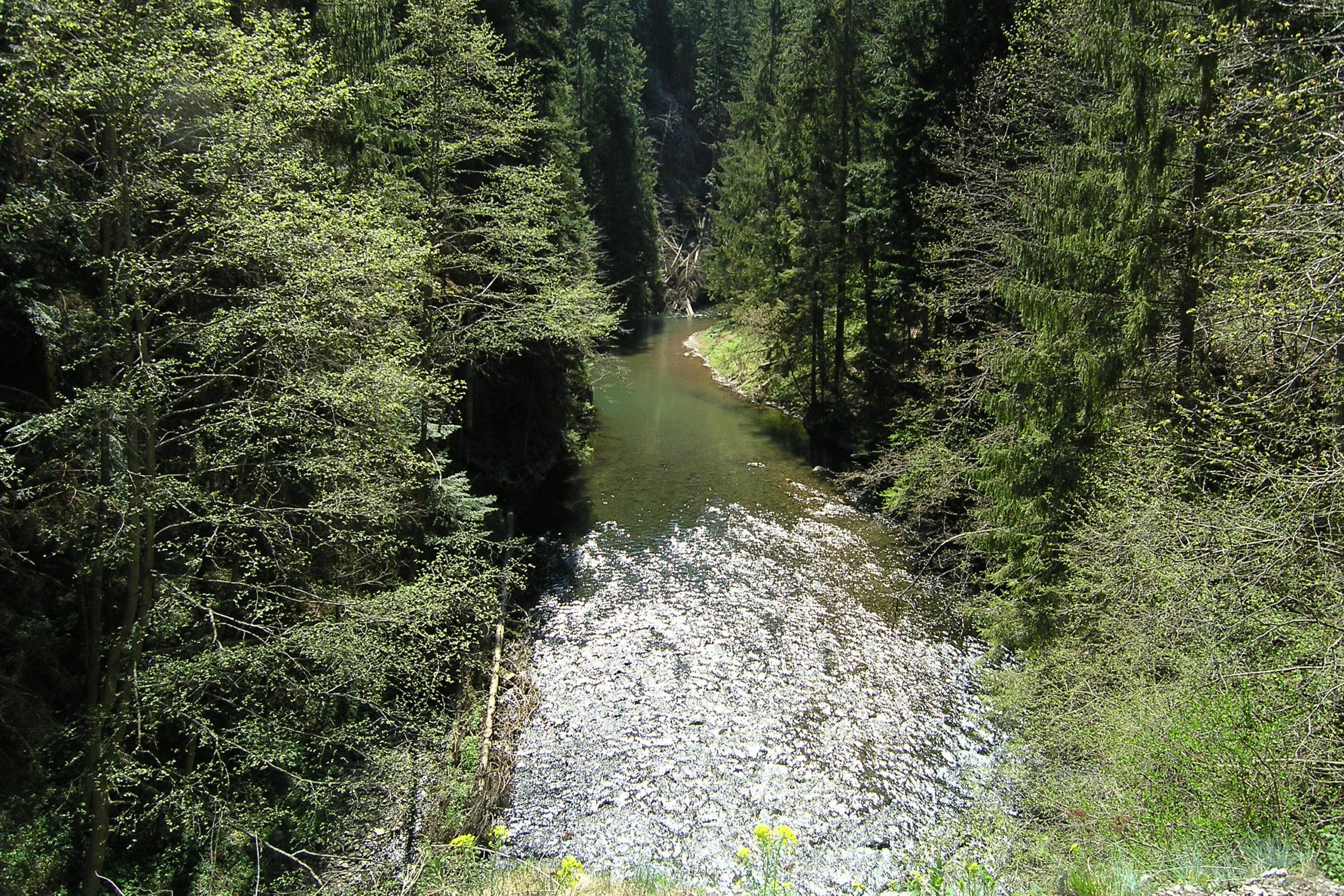Potok w lesie
