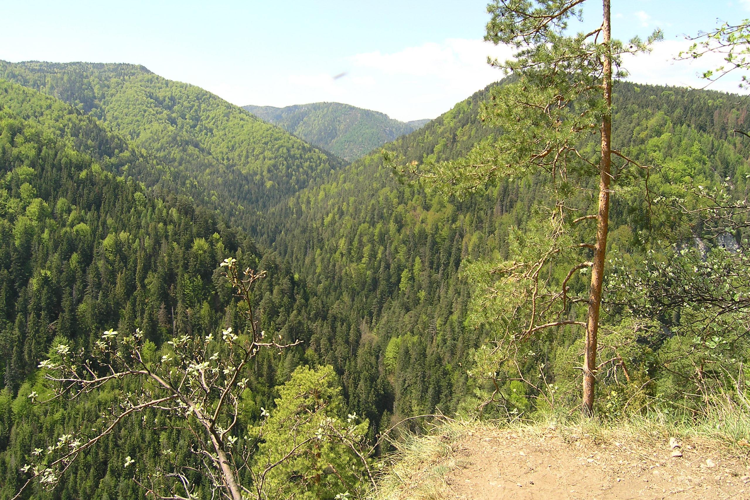 Widok na góry porośnięte drzewami