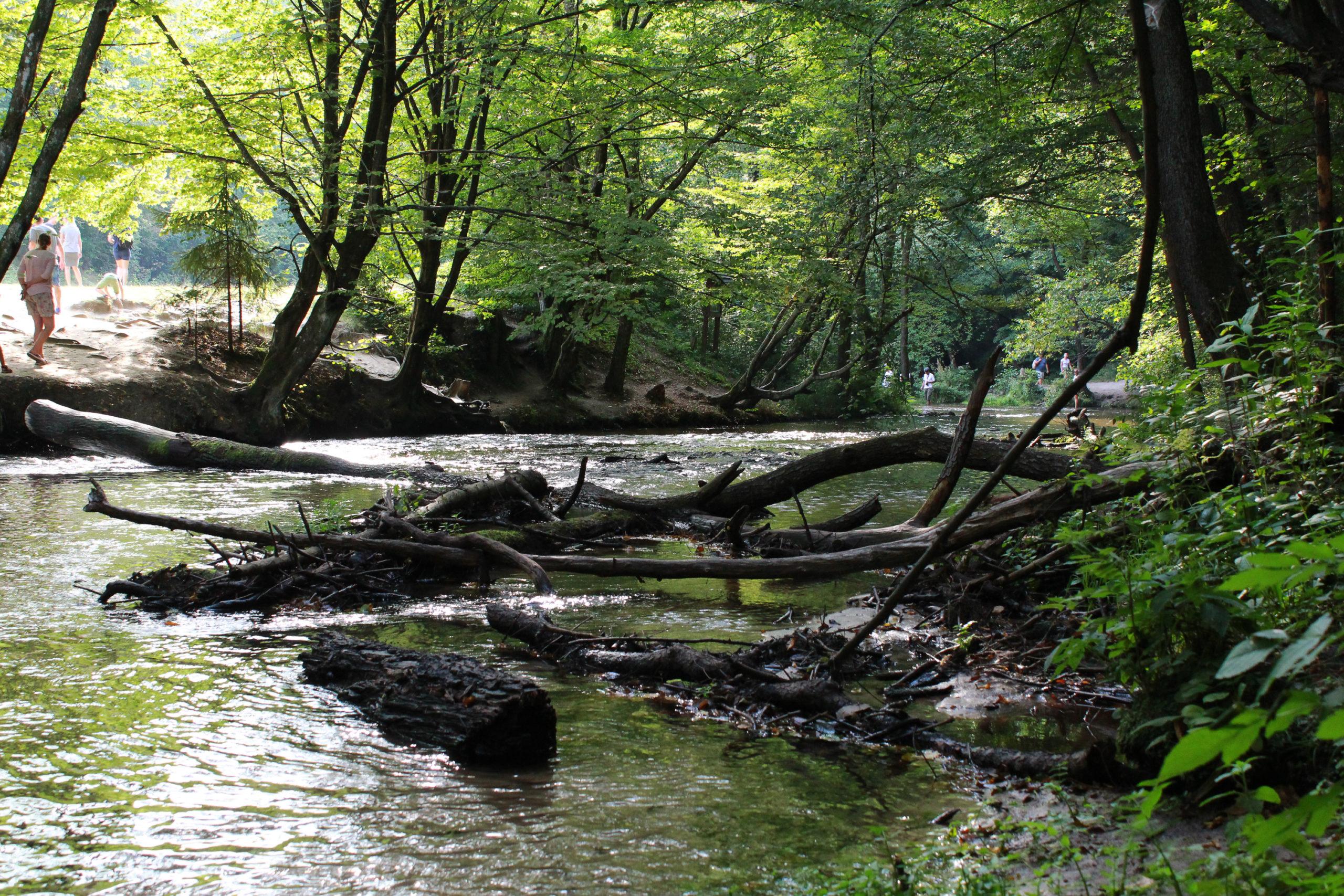 konary w rzece
