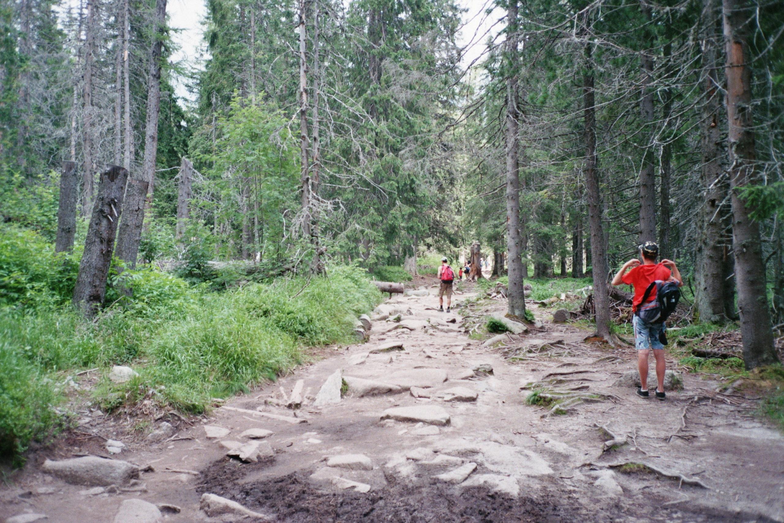 górski szlak w tatrach