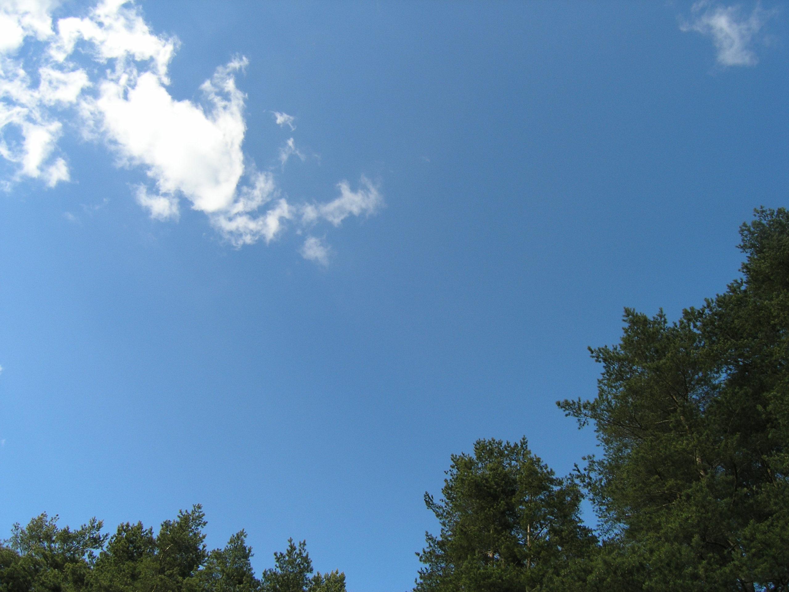 Korony drzew i chmury