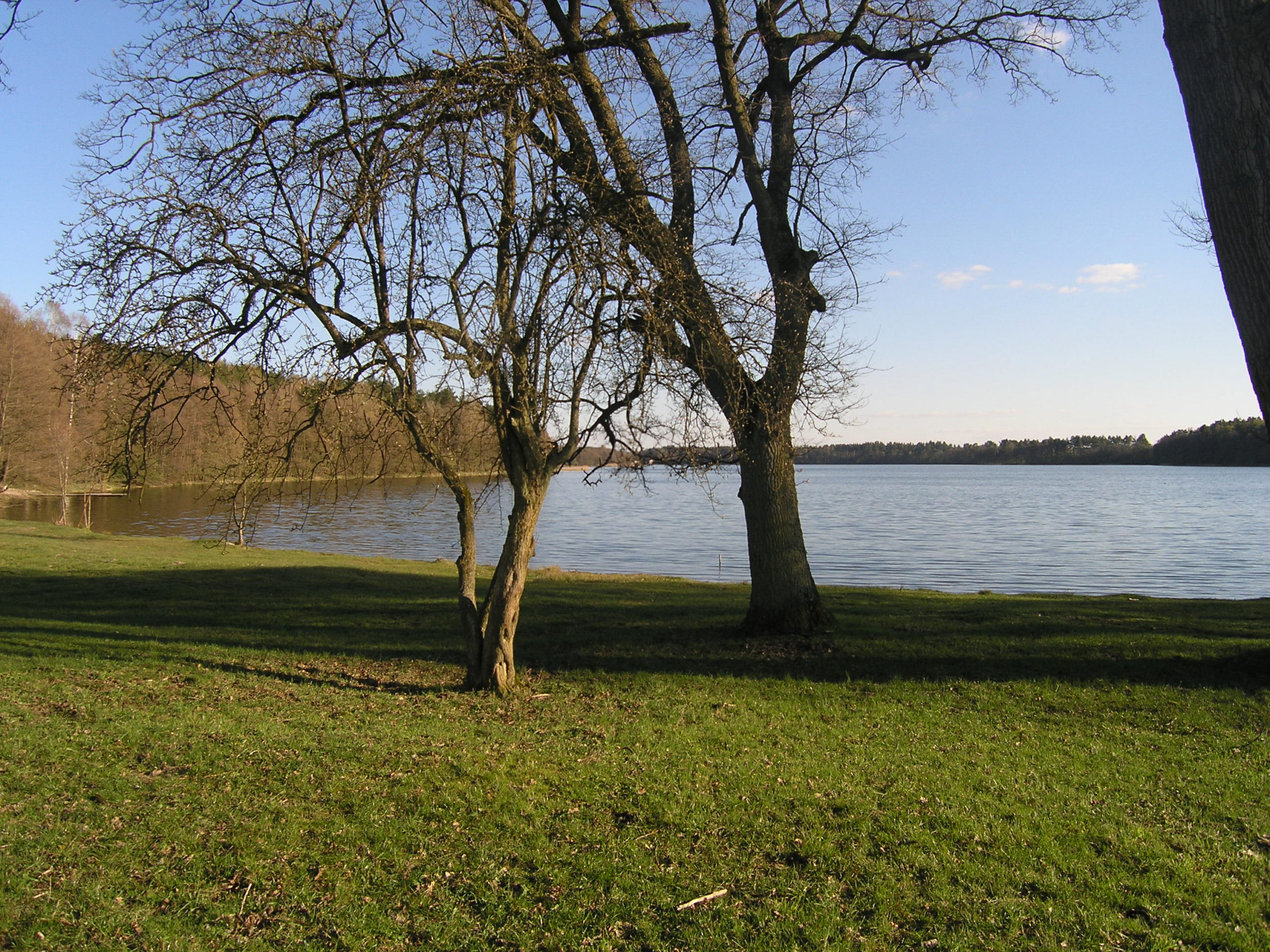Samotne drzewa nad jeziorem