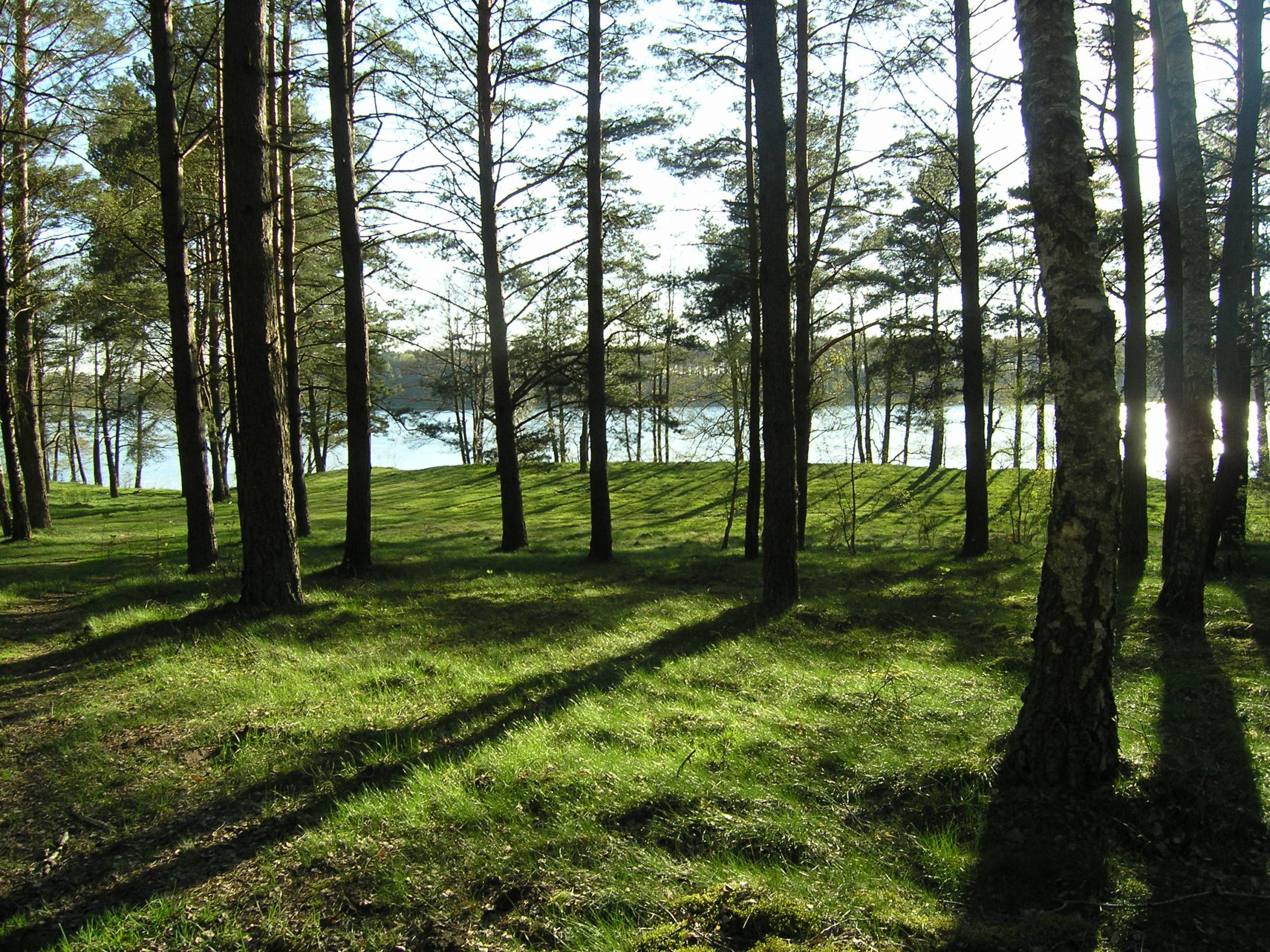 Drzewa rzucają cienie