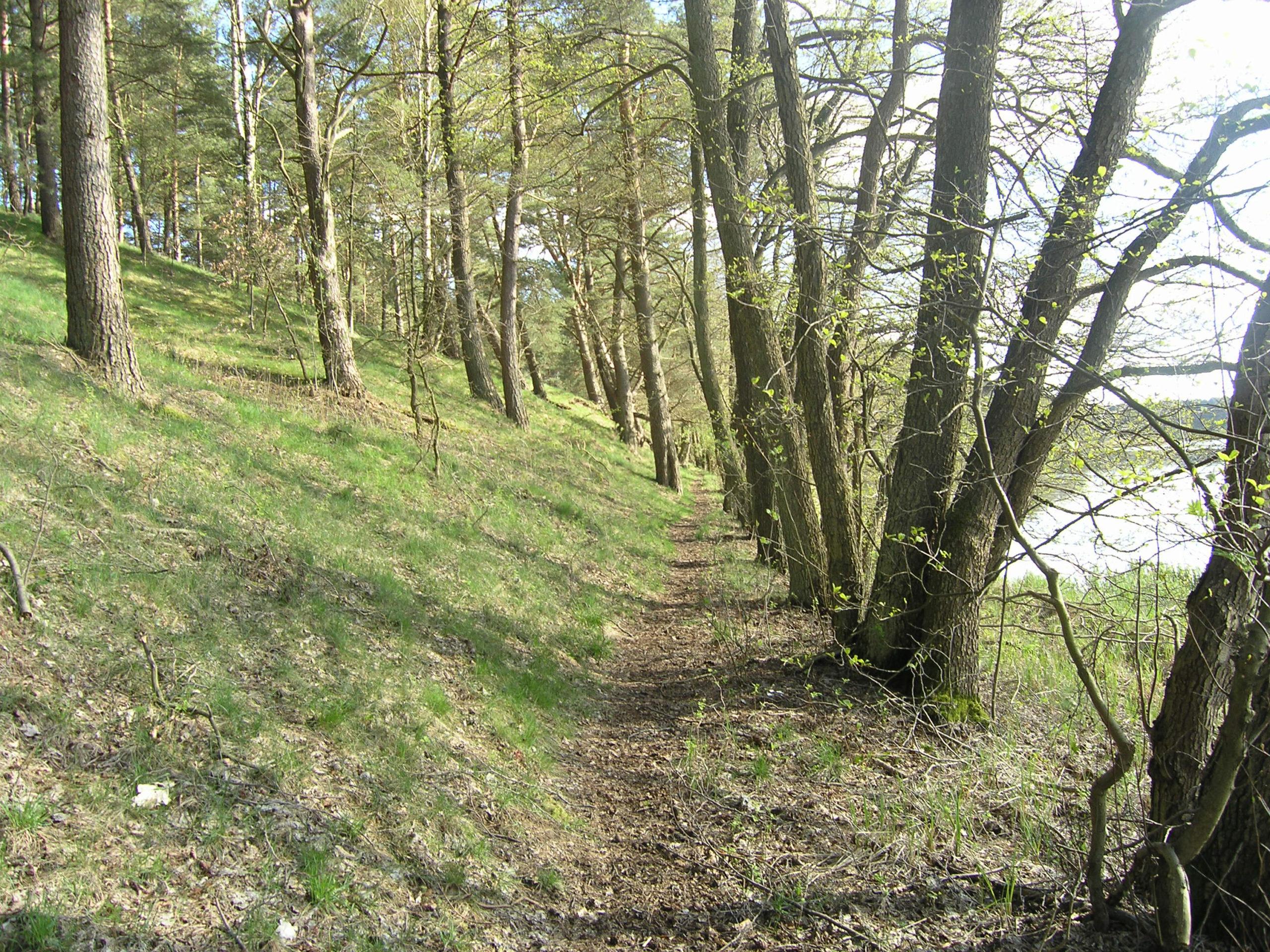 Ścieżka wśród drzew nad jeziorem