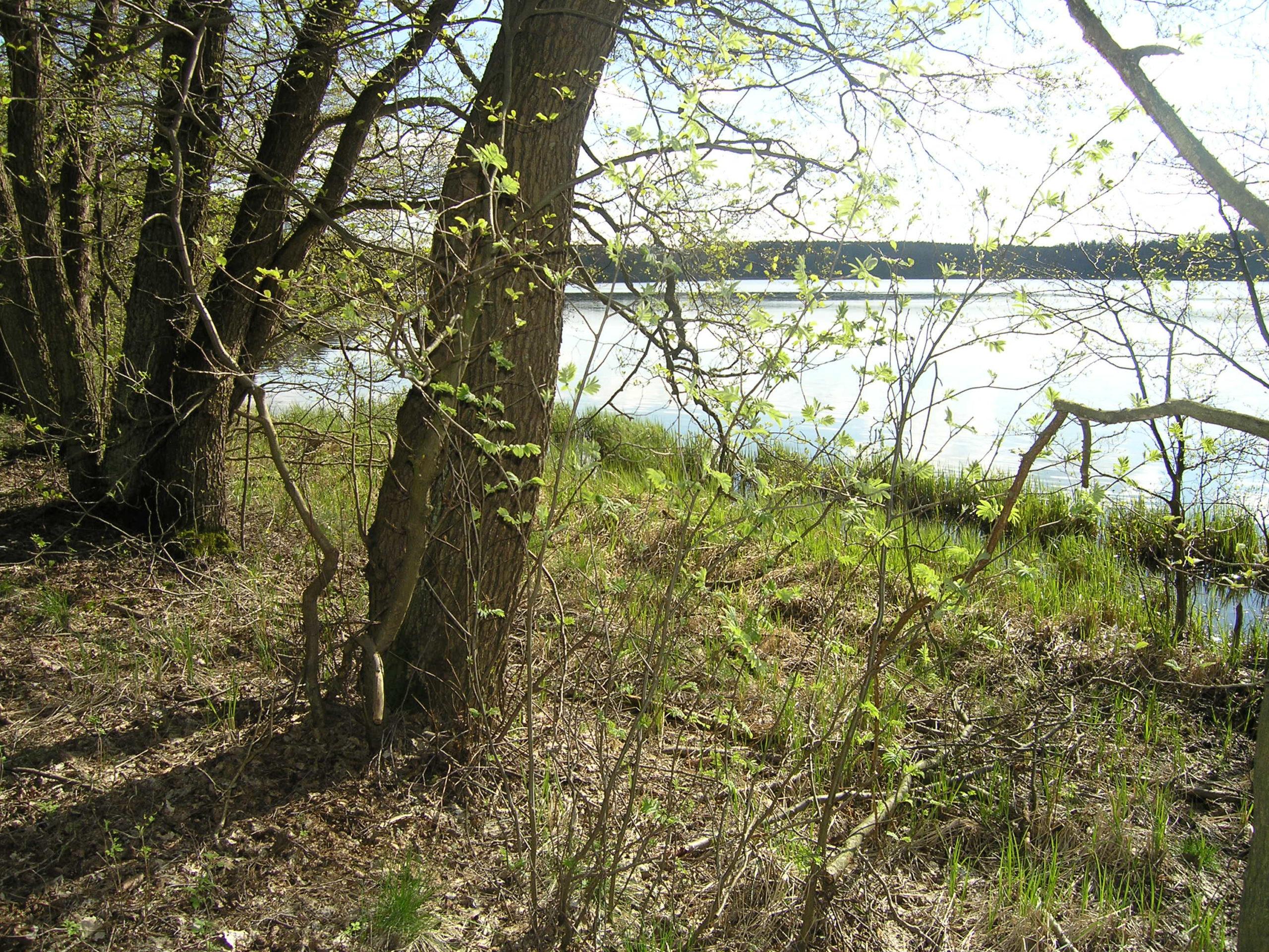 Drzewa nad jeziorem