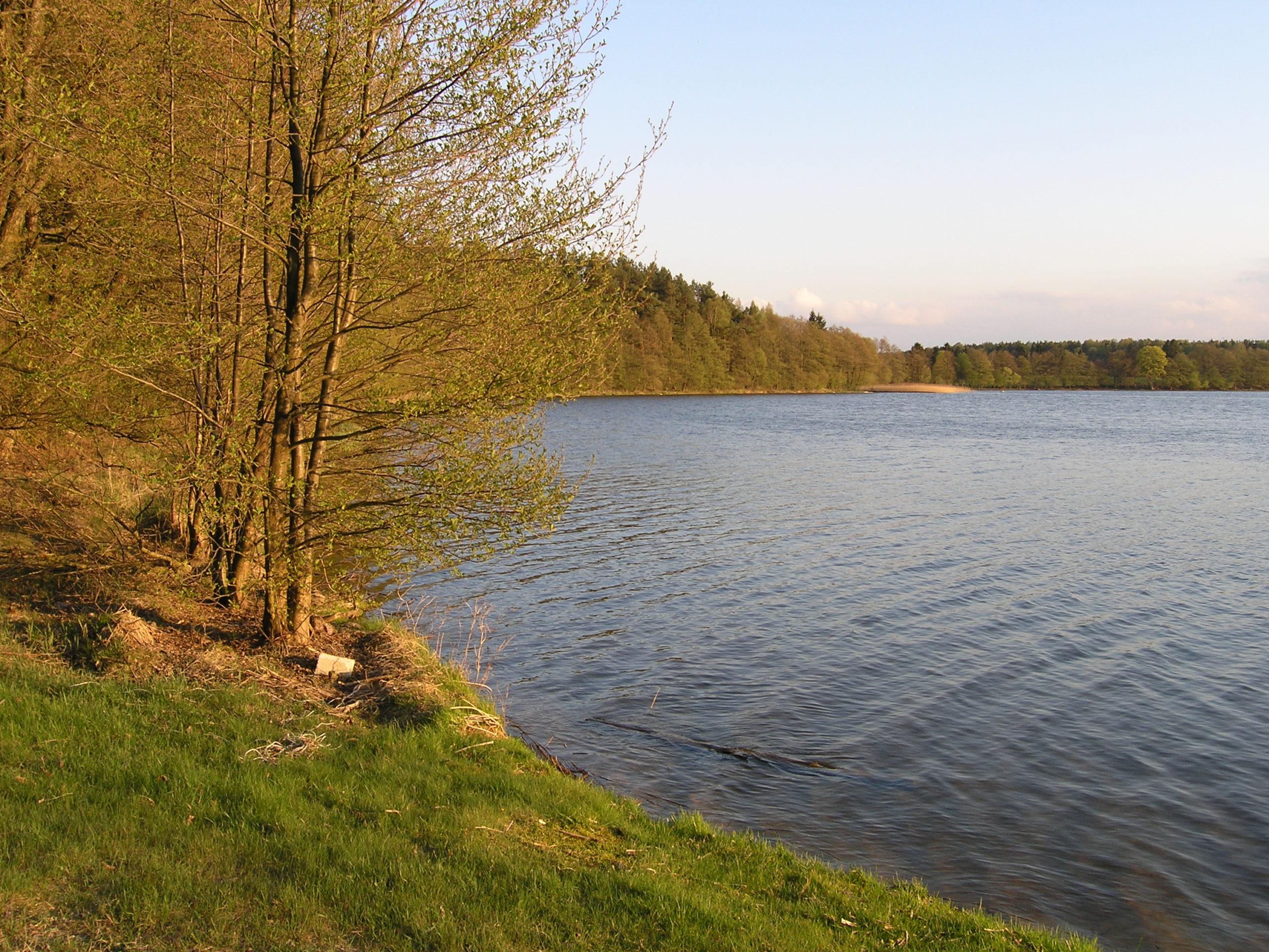 Drzewa na brzegiem jeziora
