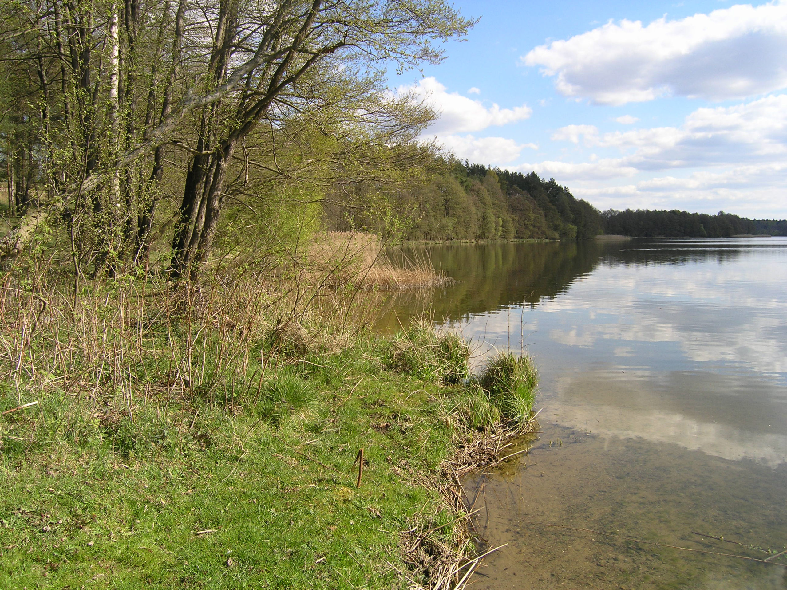 Zielony brzeg jeziora