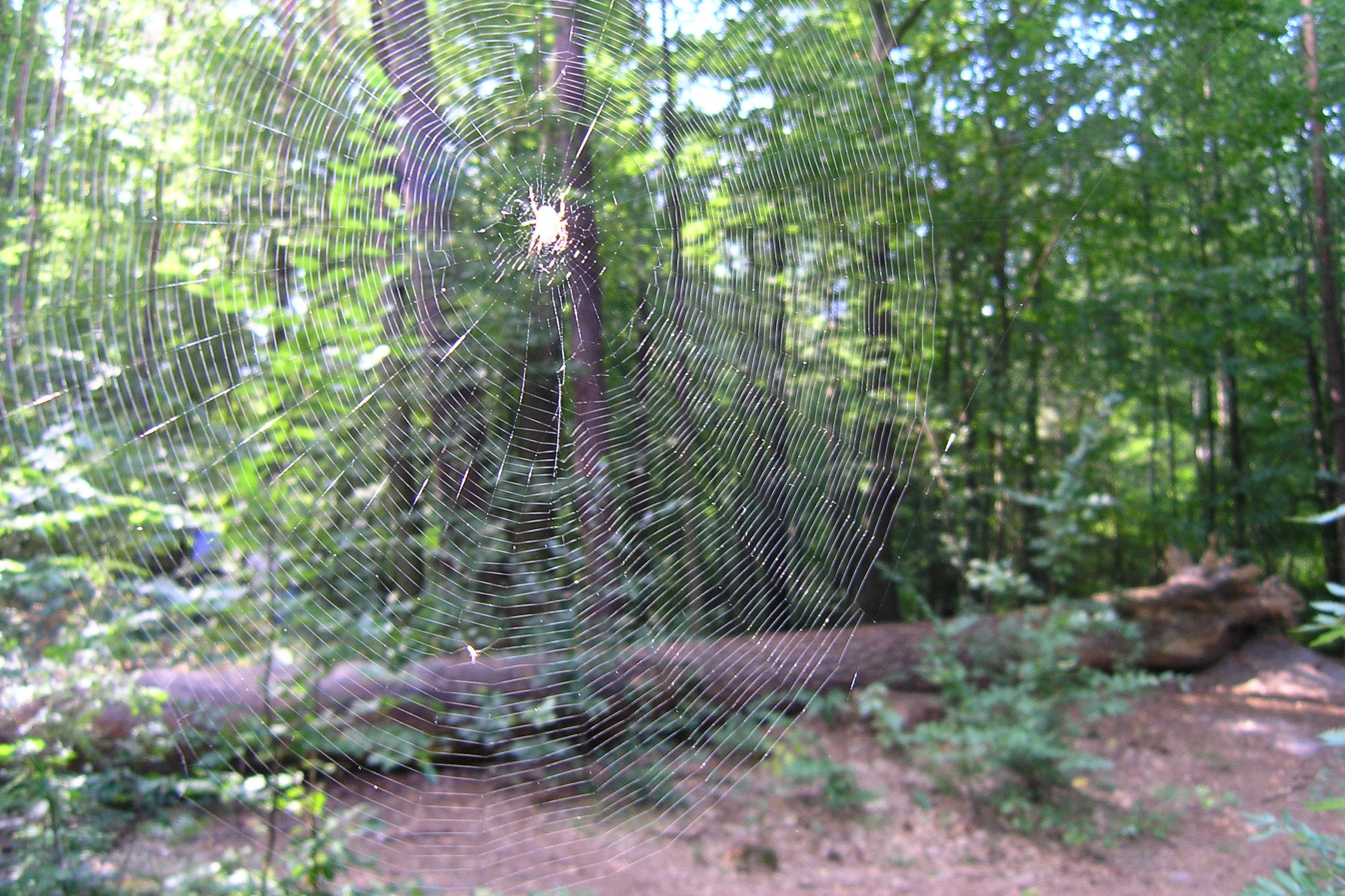 Pajęczyna w lesie