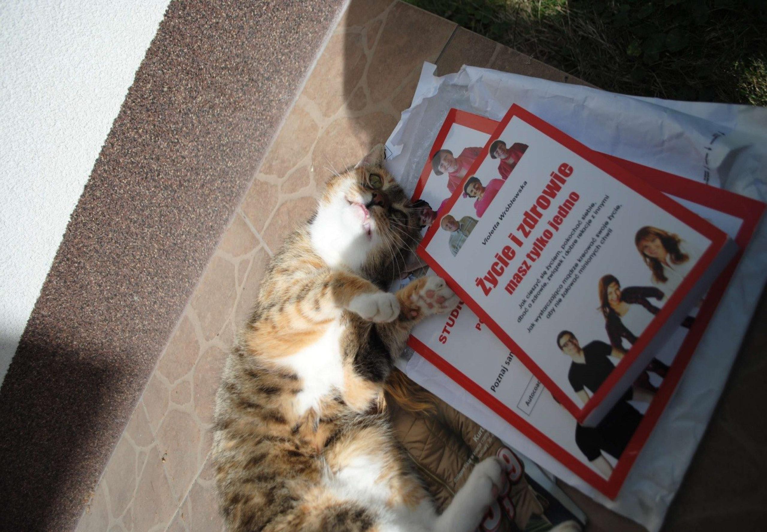 kotek przy książkach