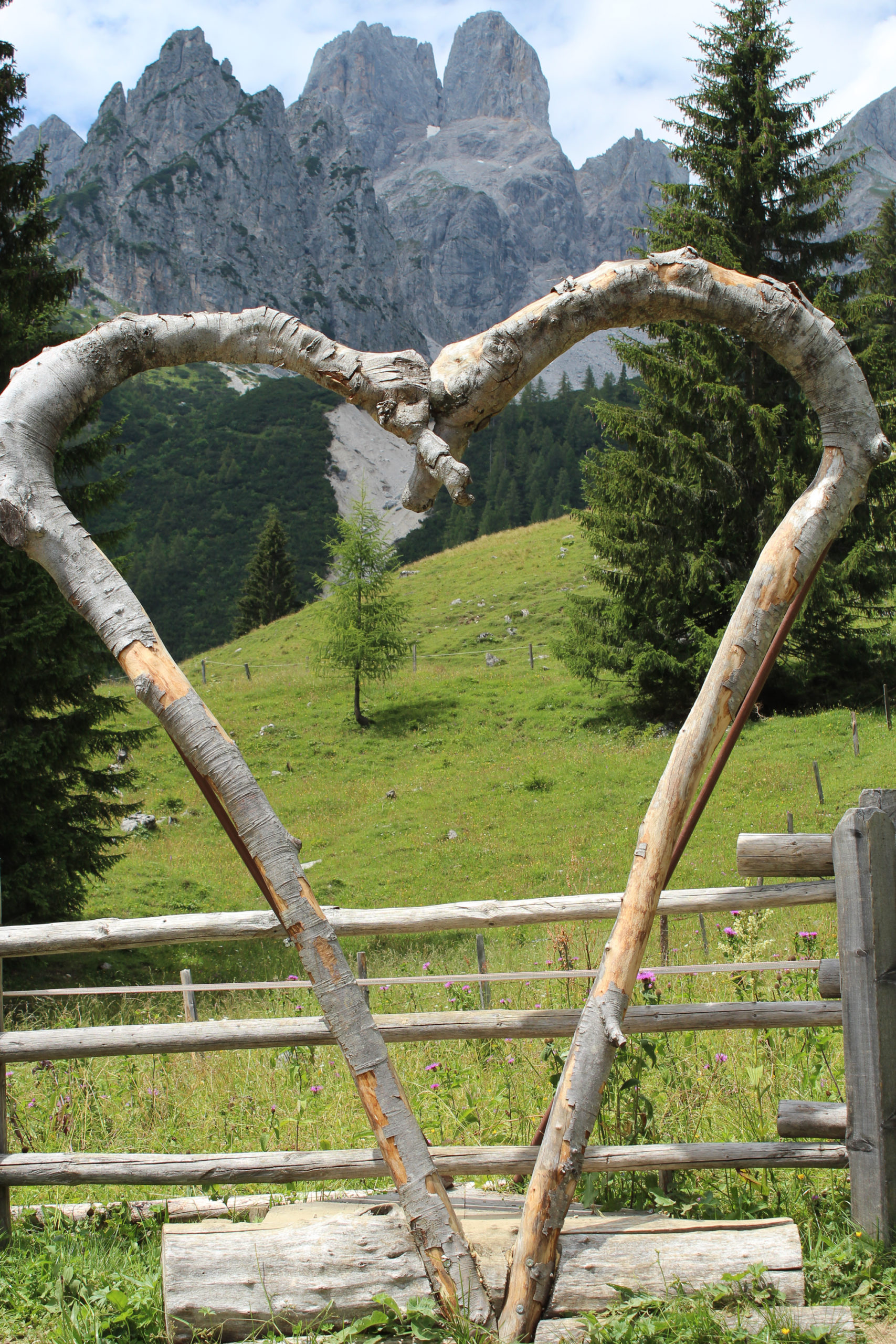 Serce z konarów