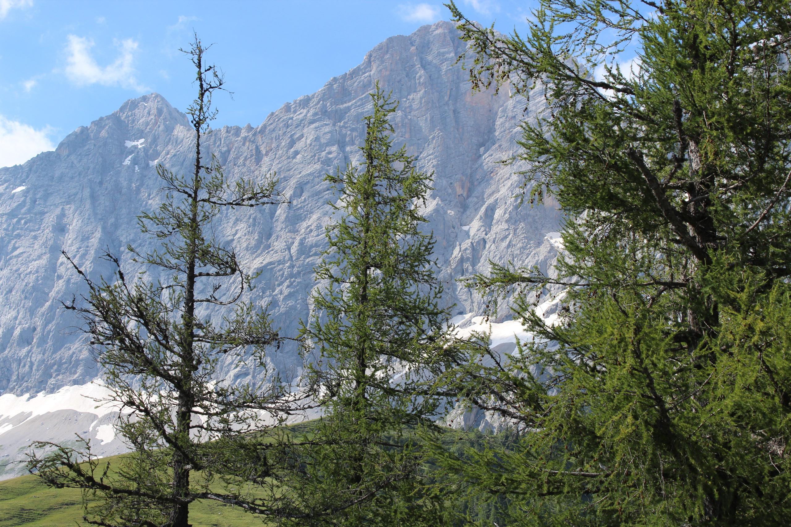 Widok na góry i drzewa