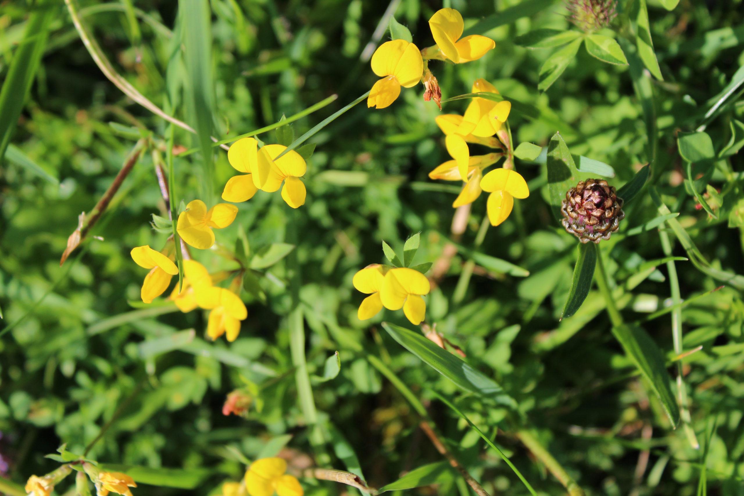 Żółte kwiatki