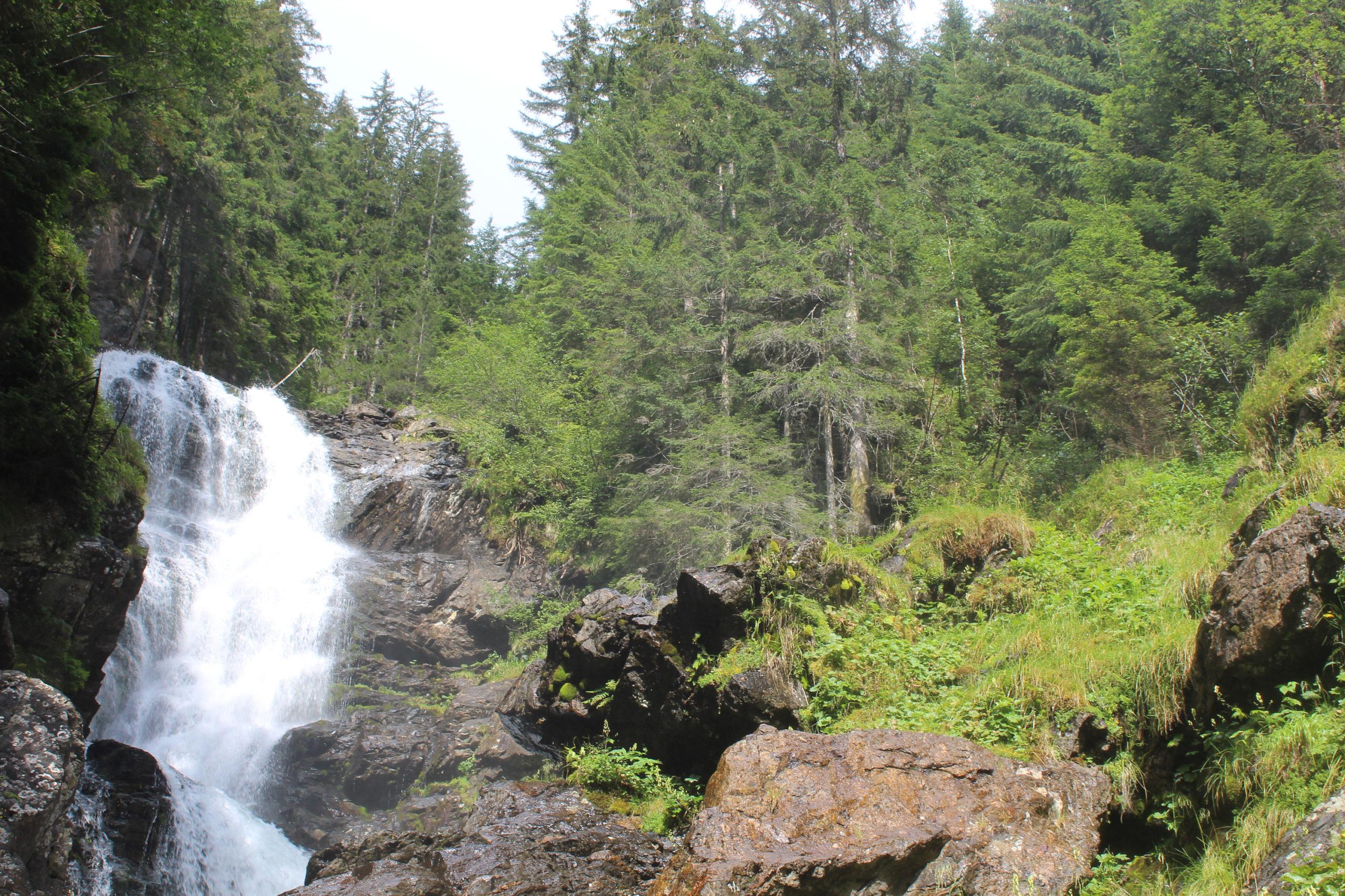 Potok górski i las