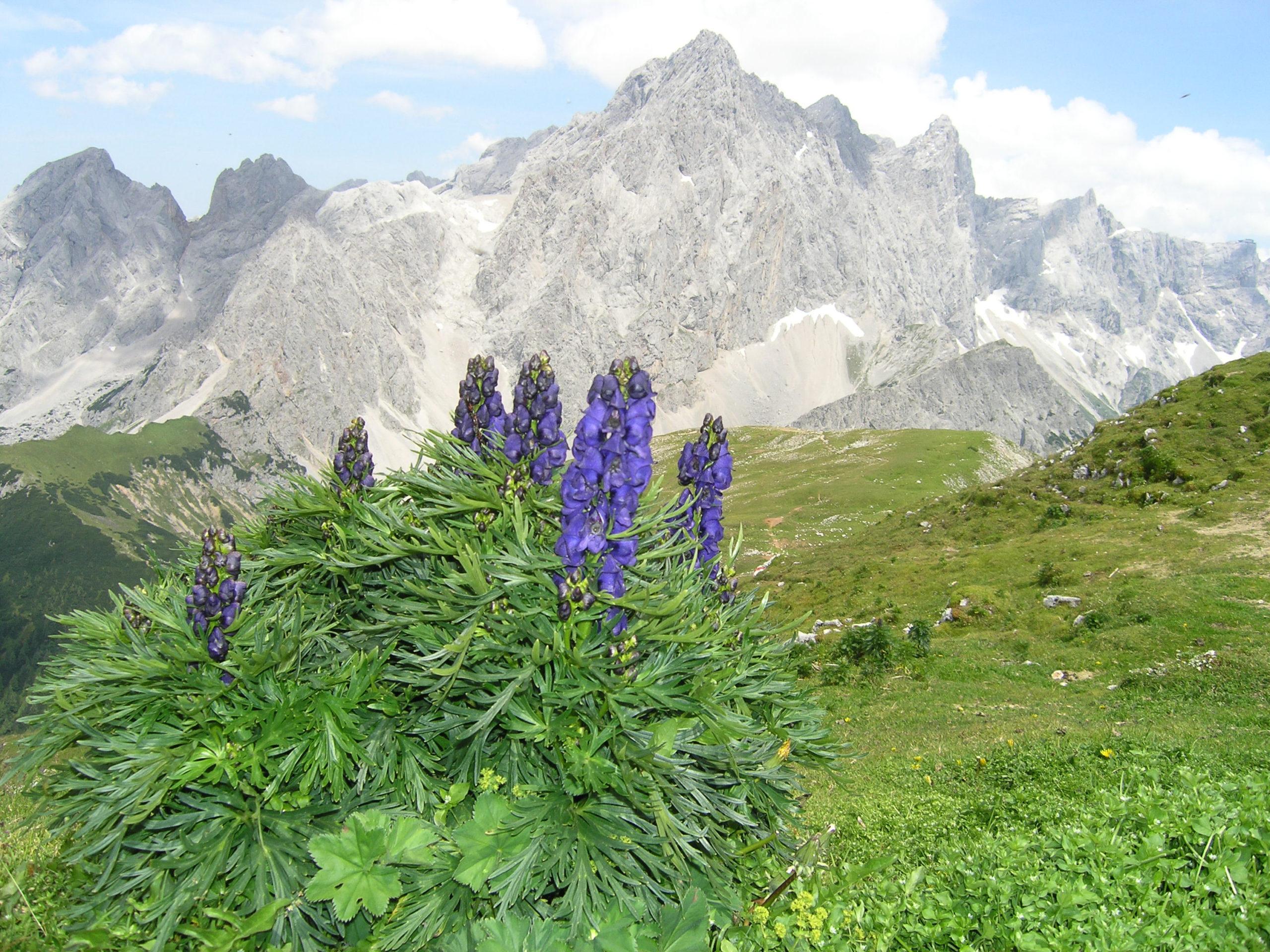 Fioletowe rośliny na tle gór