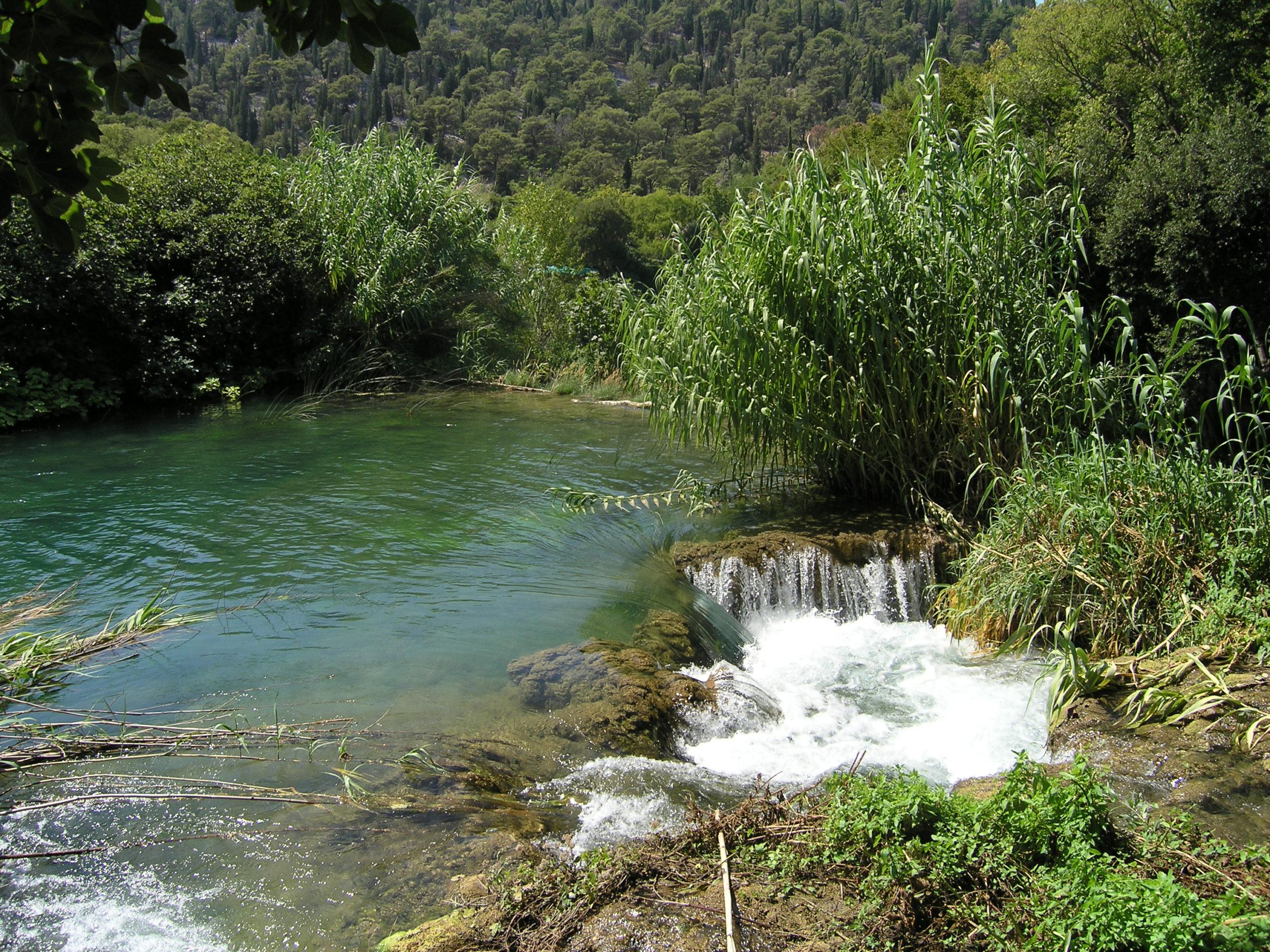 Rzeka wśród zieleni