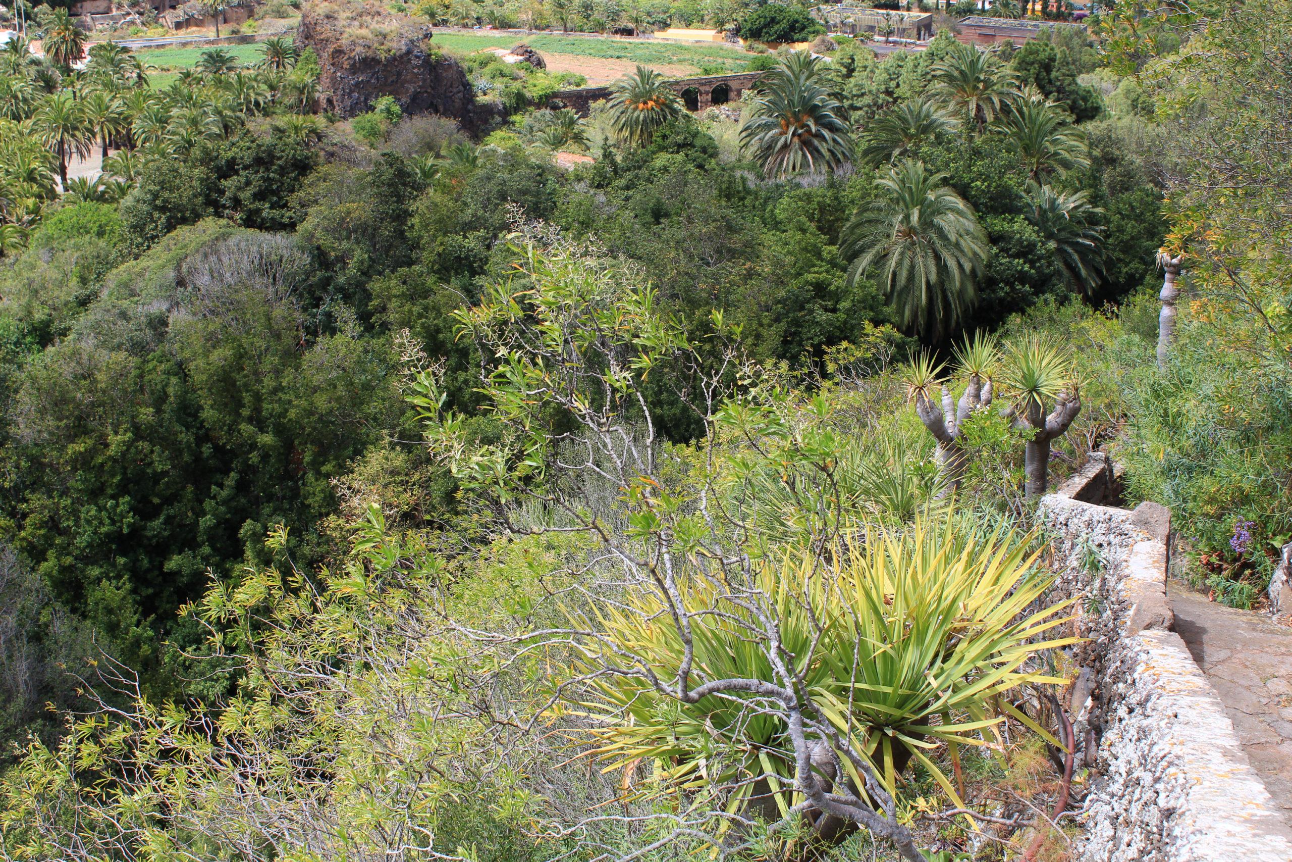 Palmy i inna roślinność