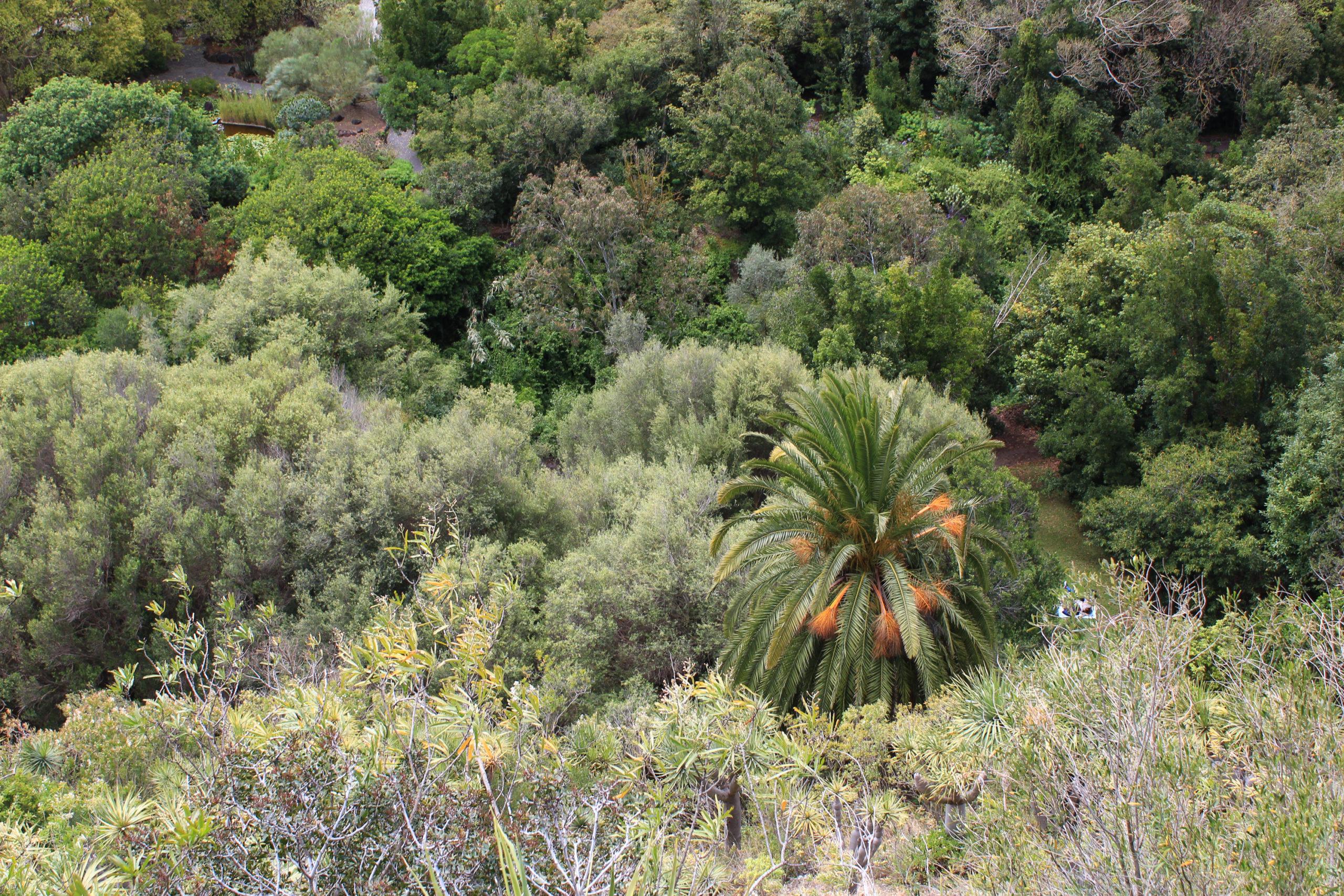 Widok na roślinność